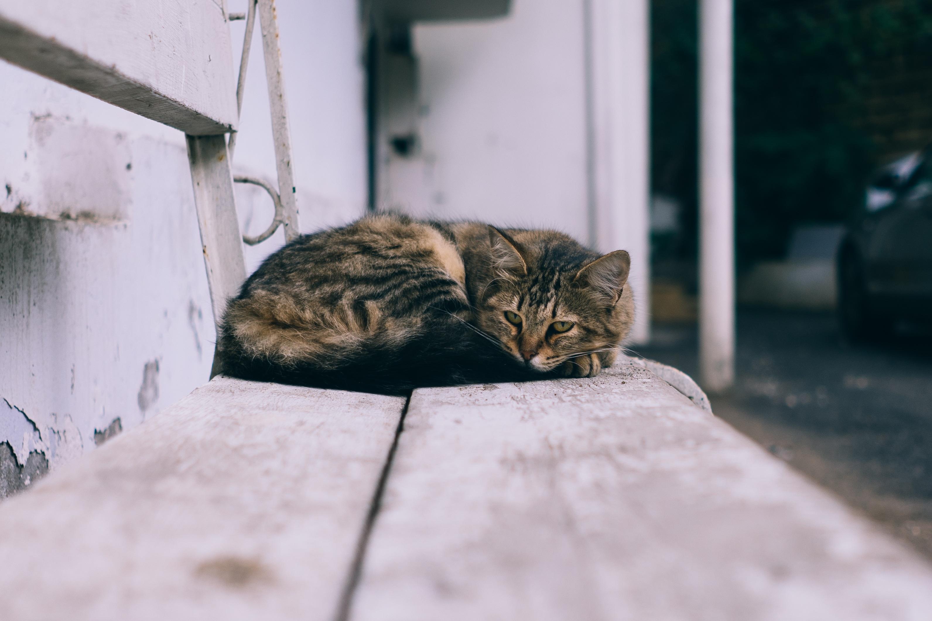 Černá krém kočička