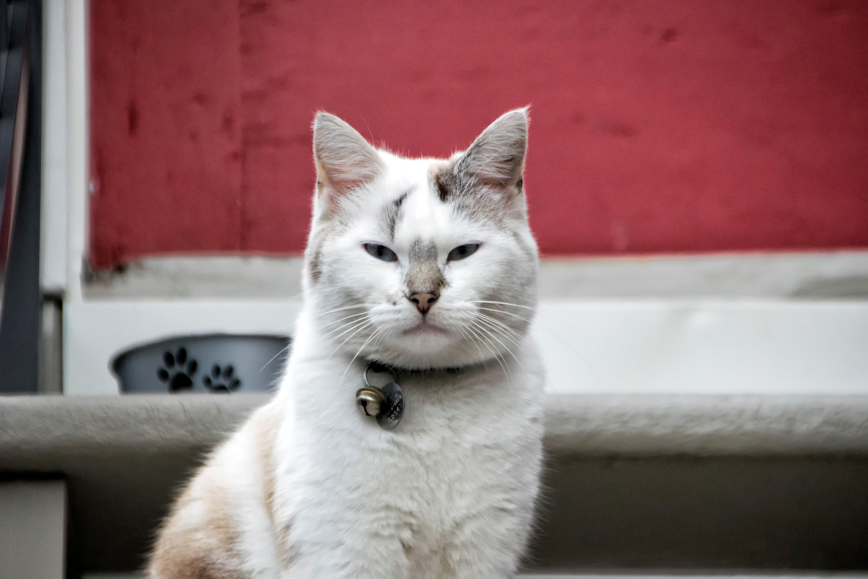 Cat gratuit Online Quebec)