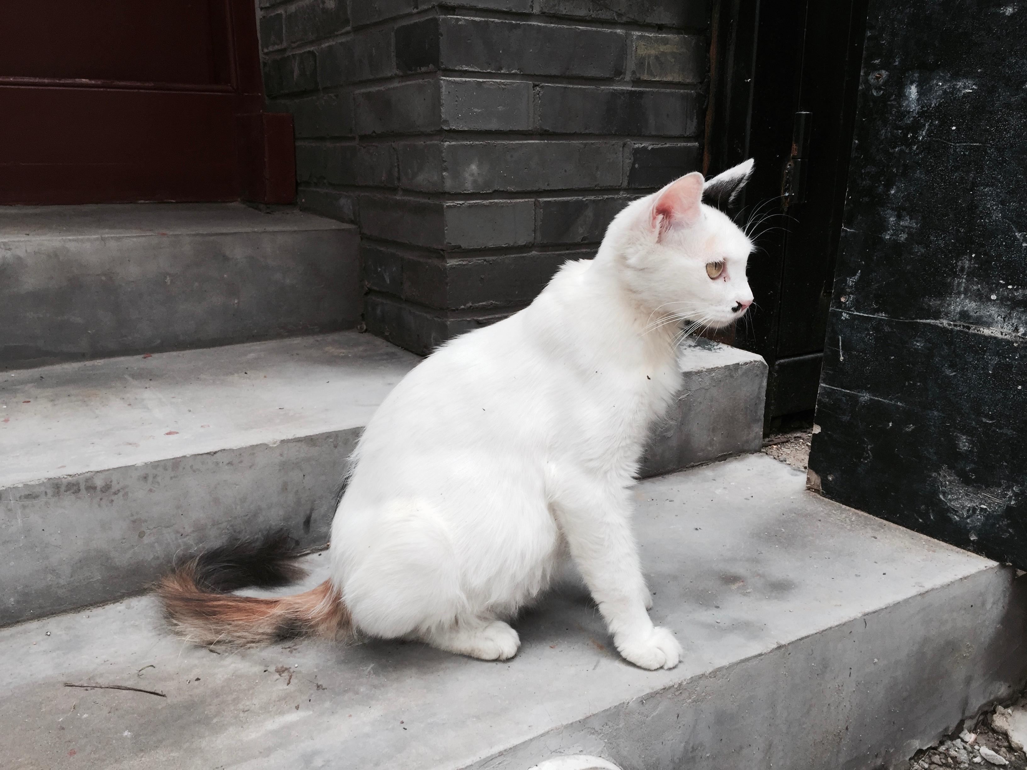 b692e72f790db7 vit katt däggdjur ryggradsdjur små till medelstora katter katt som däggdjur