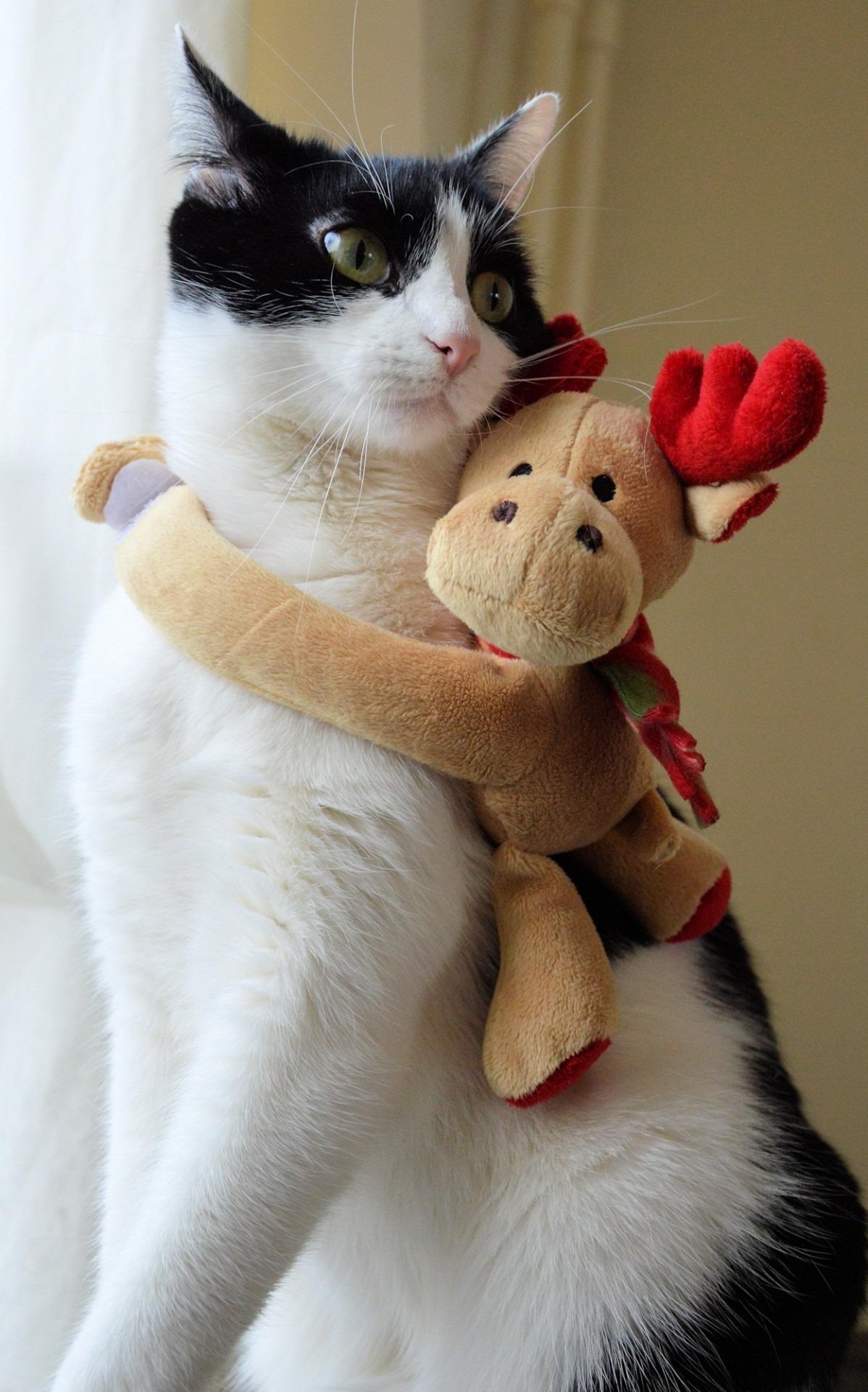 Gambar : putih, rusa, membelai, anak kucing, binatang menyusui, hari Natal, hidung, cambang, kulit, bertulang belakang, boneka, kecil untuk kucing berukuran ...