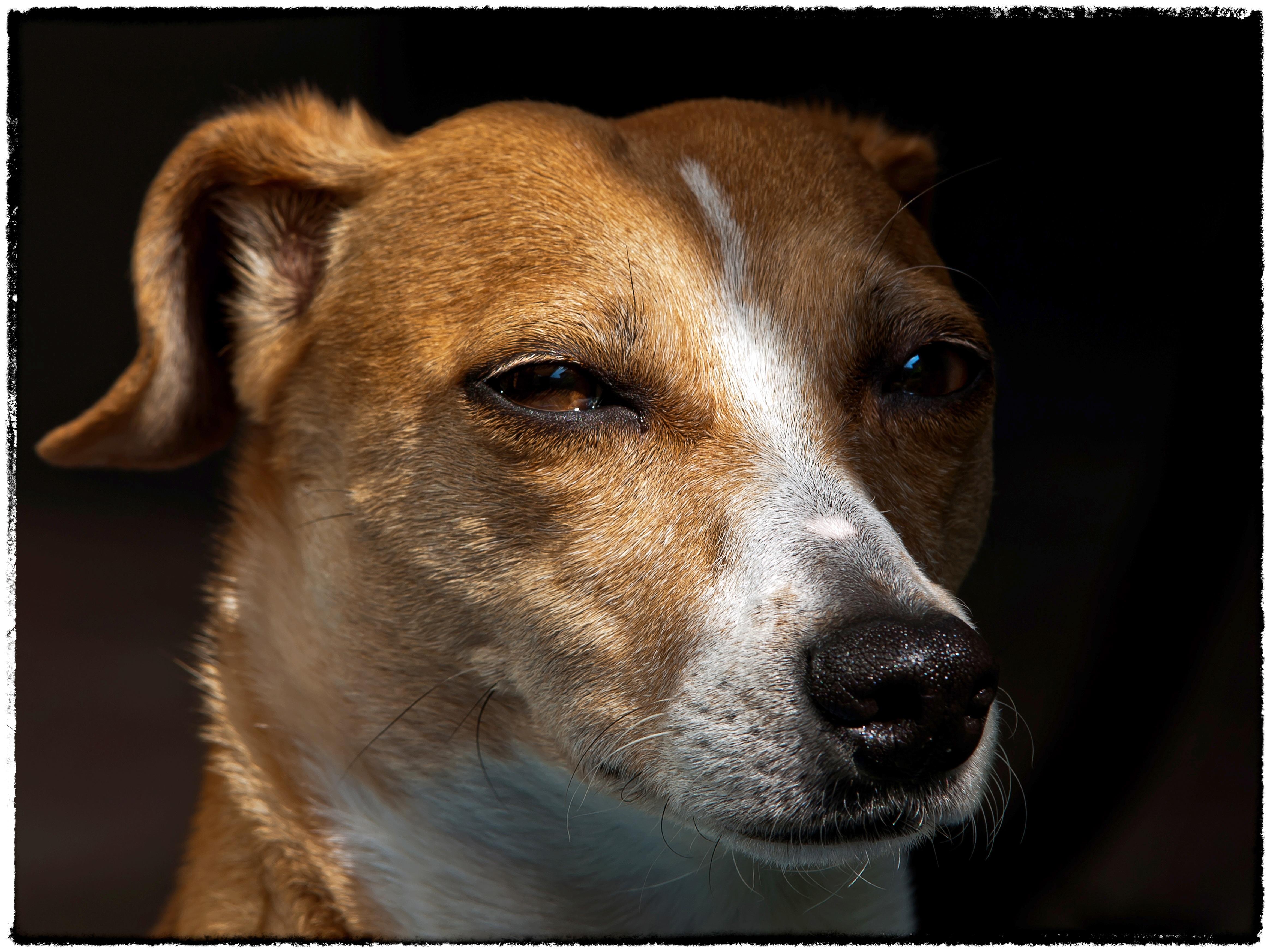 Jack Anjing