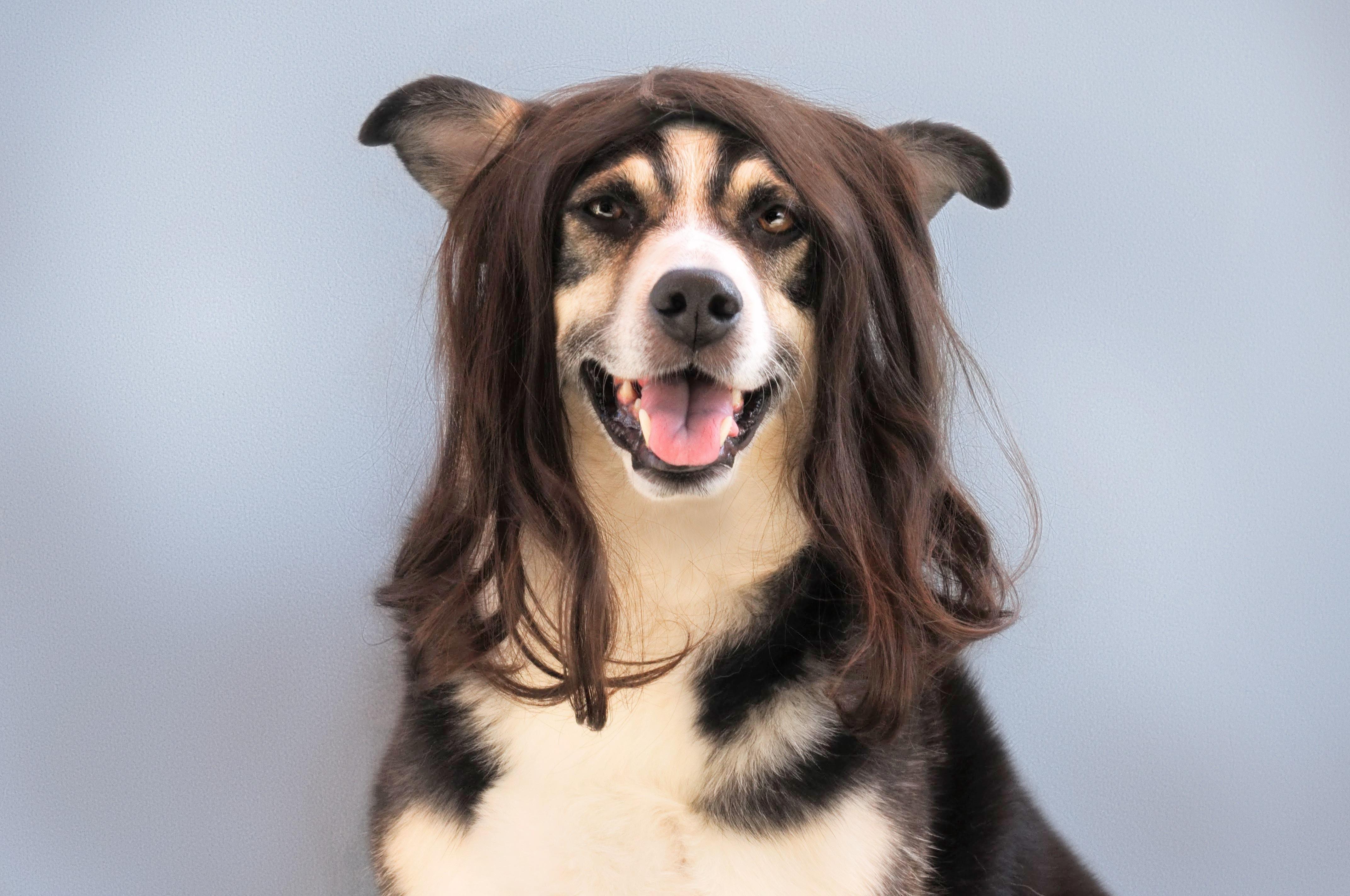Darmowe Zdjęcia Biały Pies Zwierzę Domowe Portret Czarny