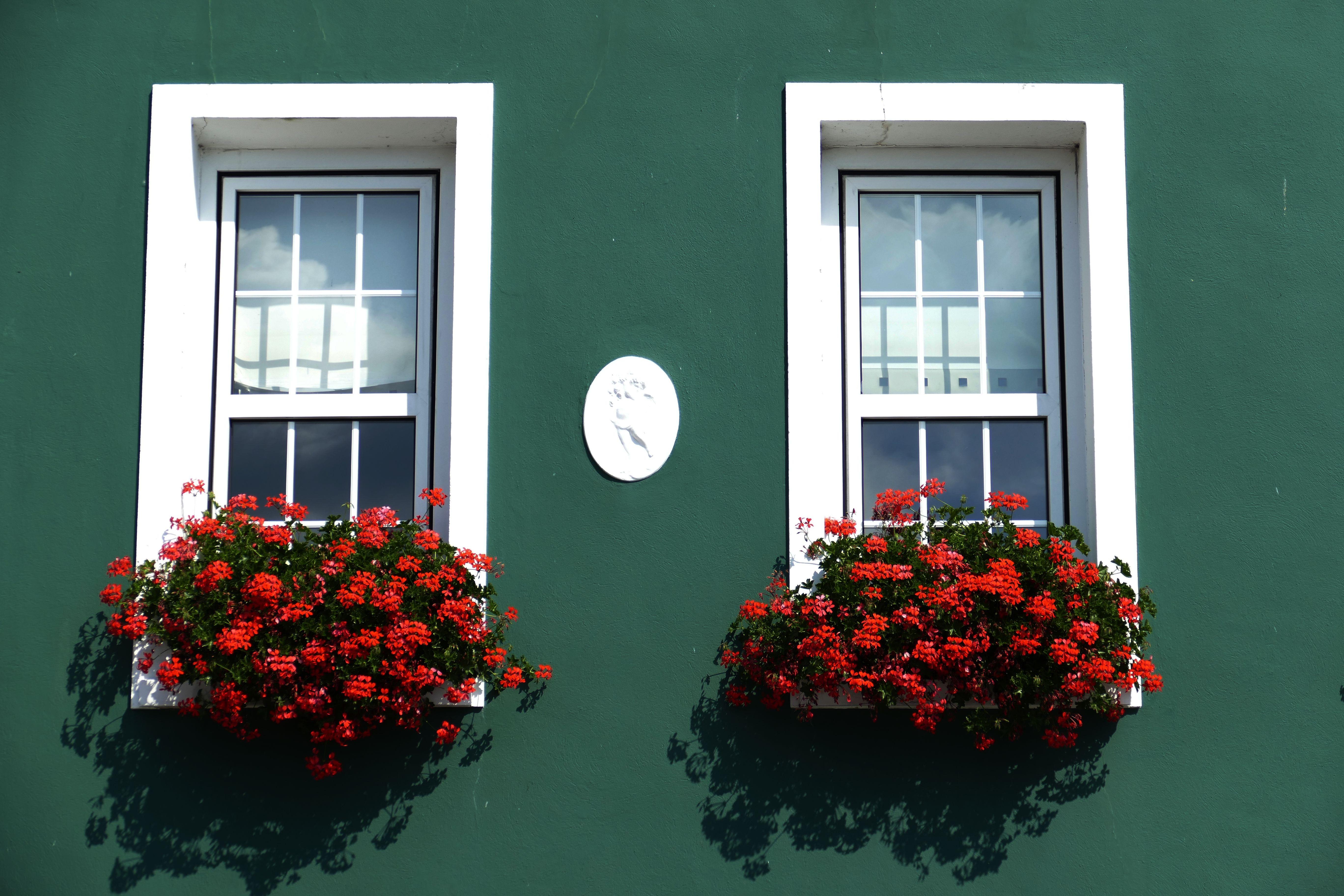 Fotos gratis blanco casa flor verde rojo color - Casas color verde ...