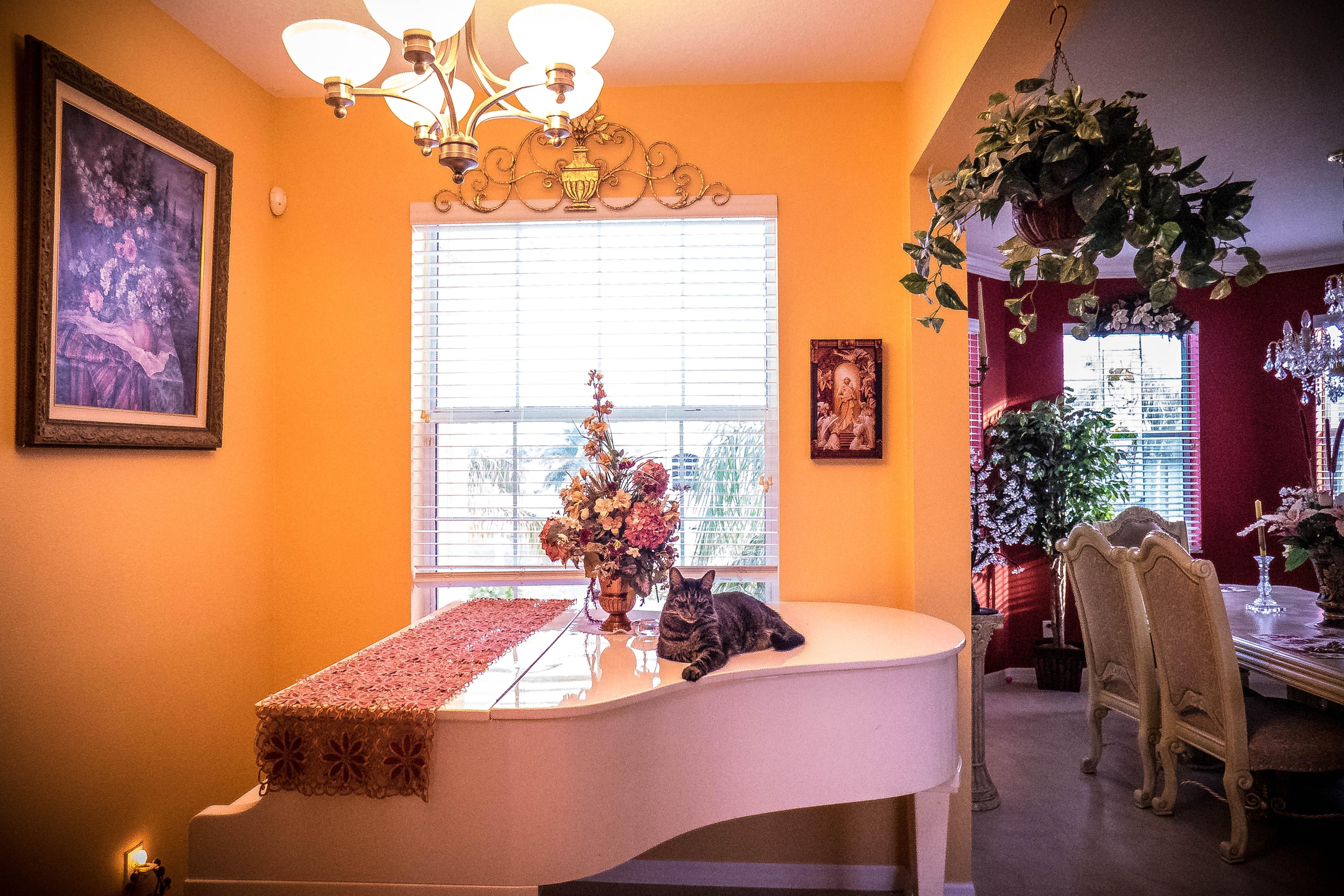 무료 이미지 : 화이트, 내부, 집, 악기, 피아노, 고양이 같은, 거실 ...