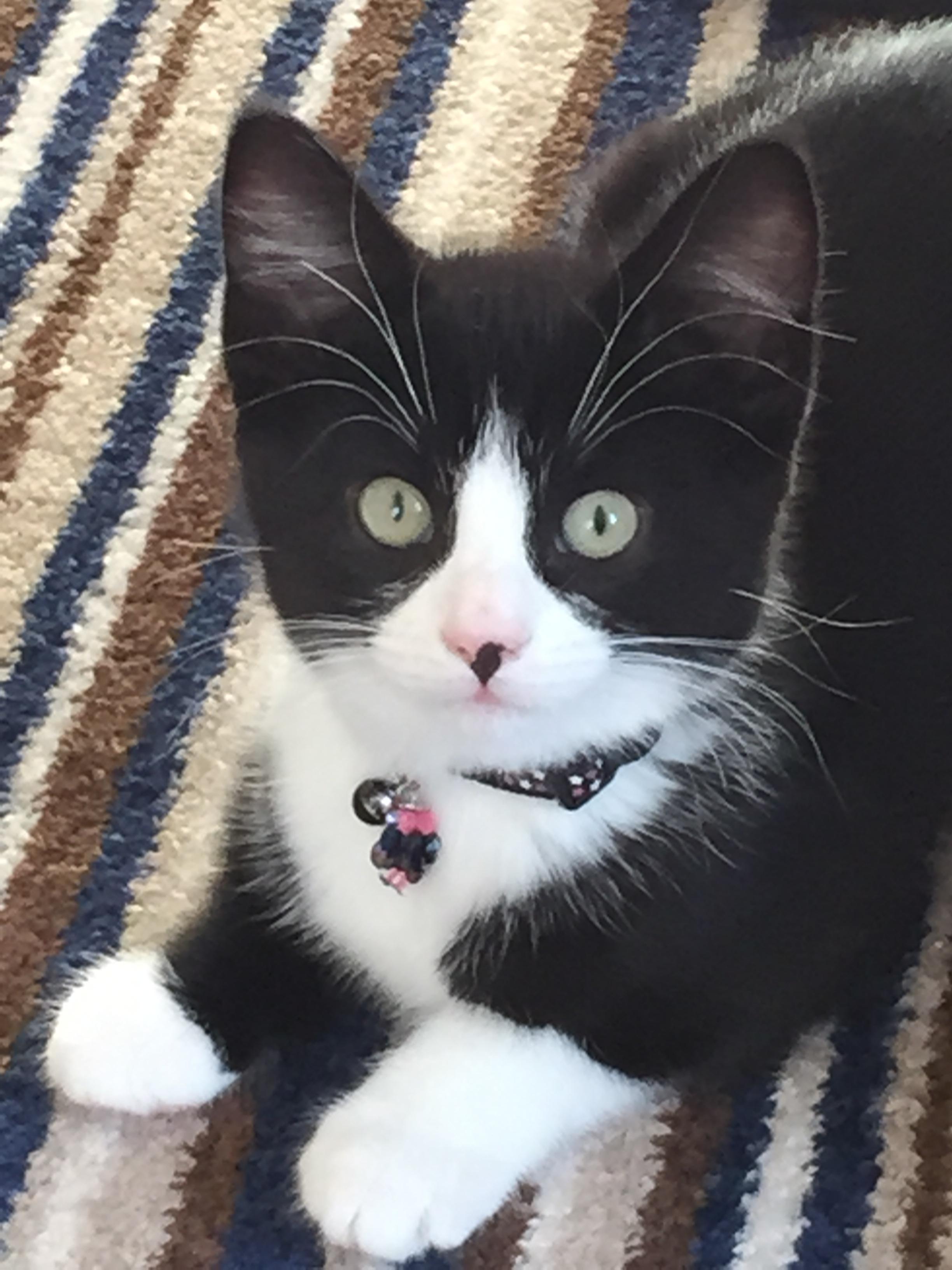 Noir une chatte blanche