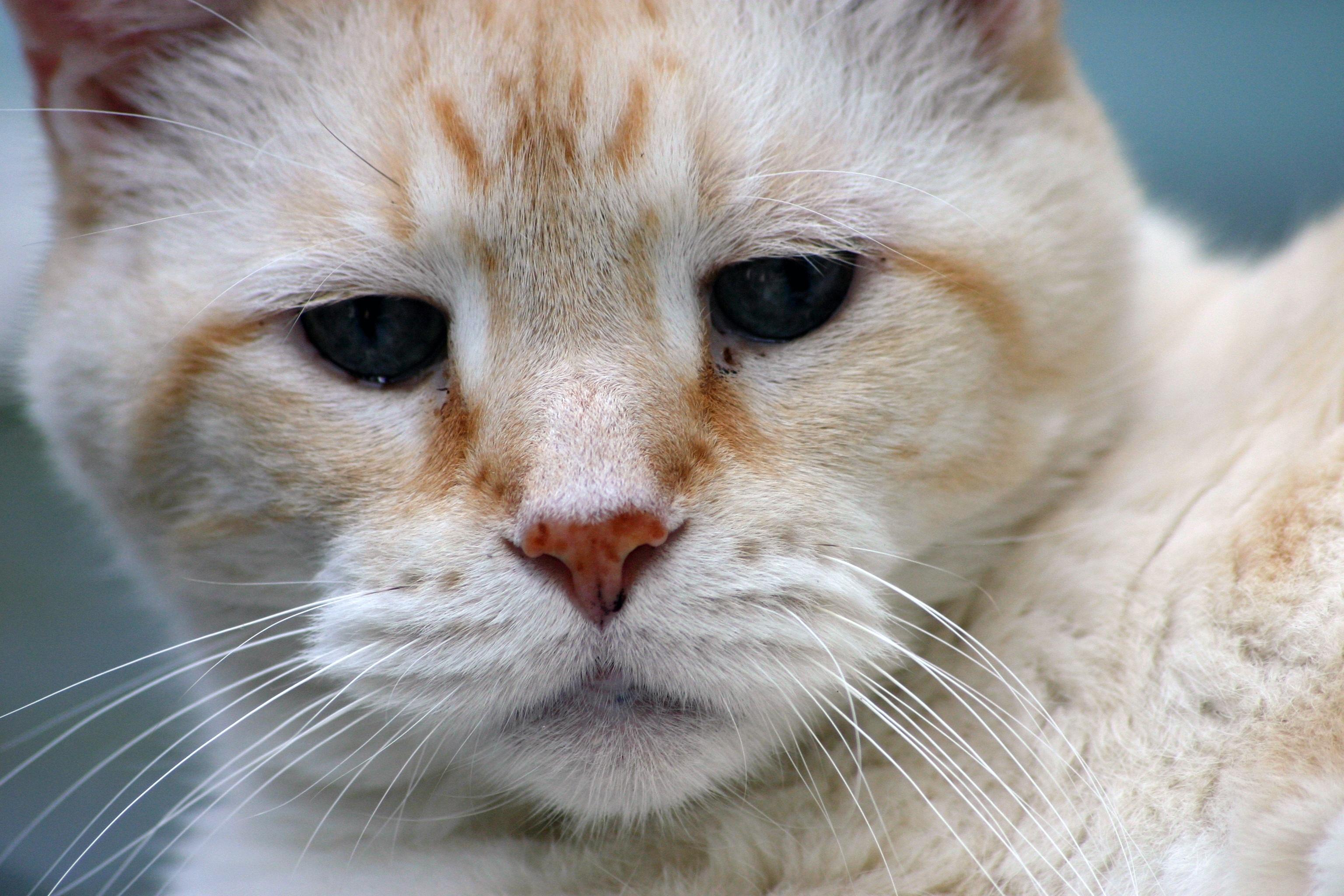 bílý kočička černoch legální dospívající kočička