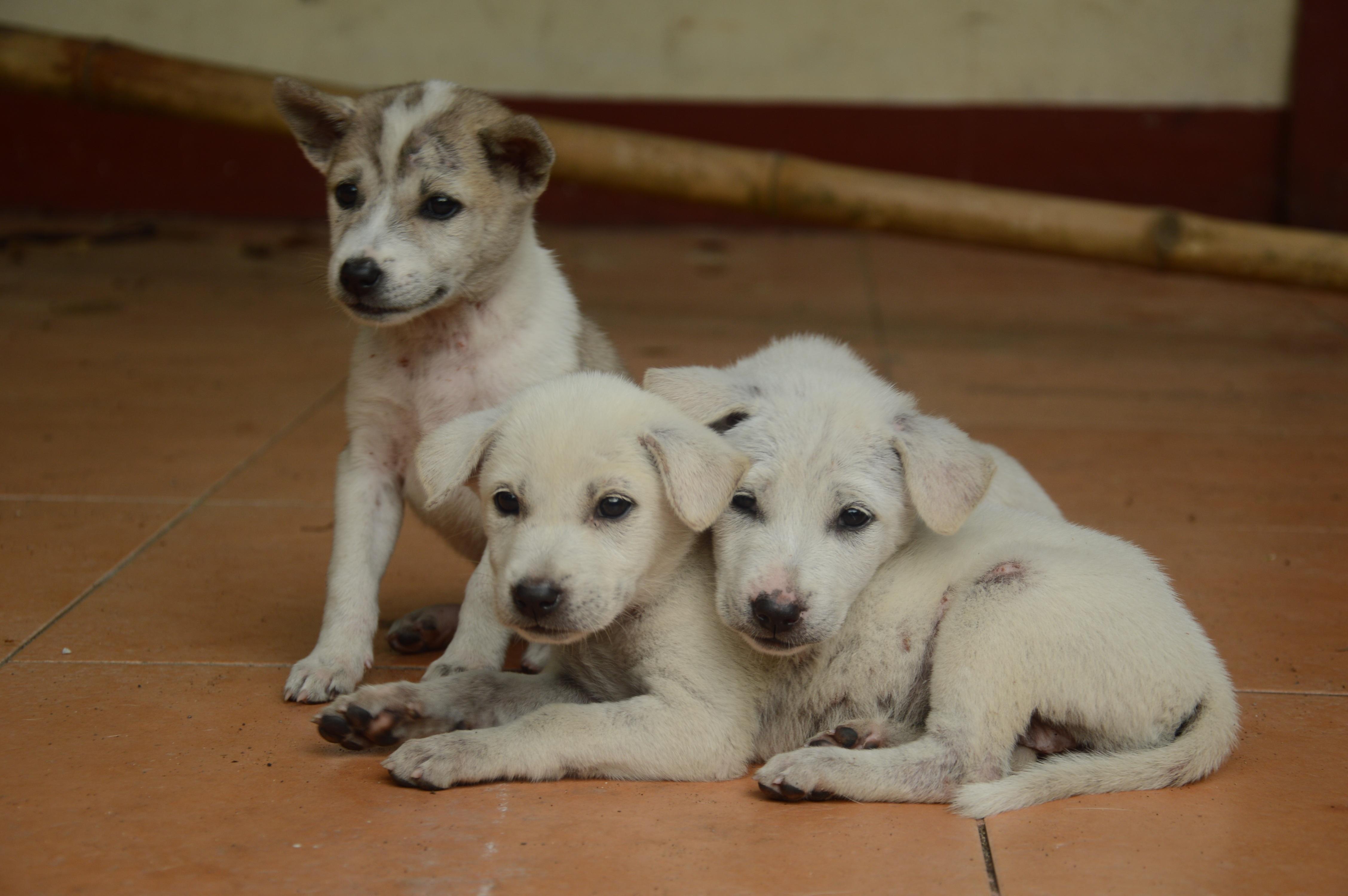 animal mignon petit chien - photo #26