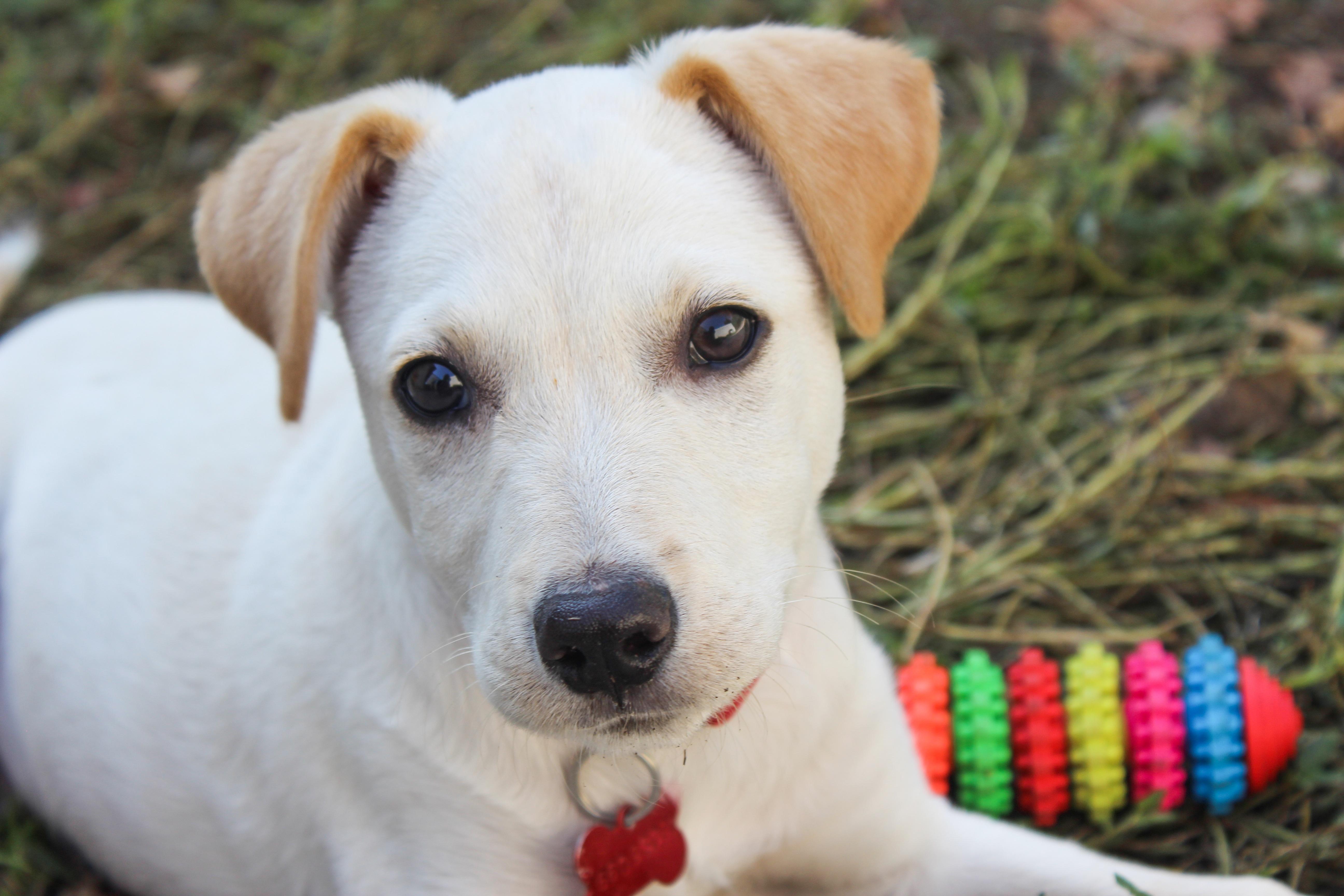 Banco De Imagens Branco Cachorro Animal Retrato