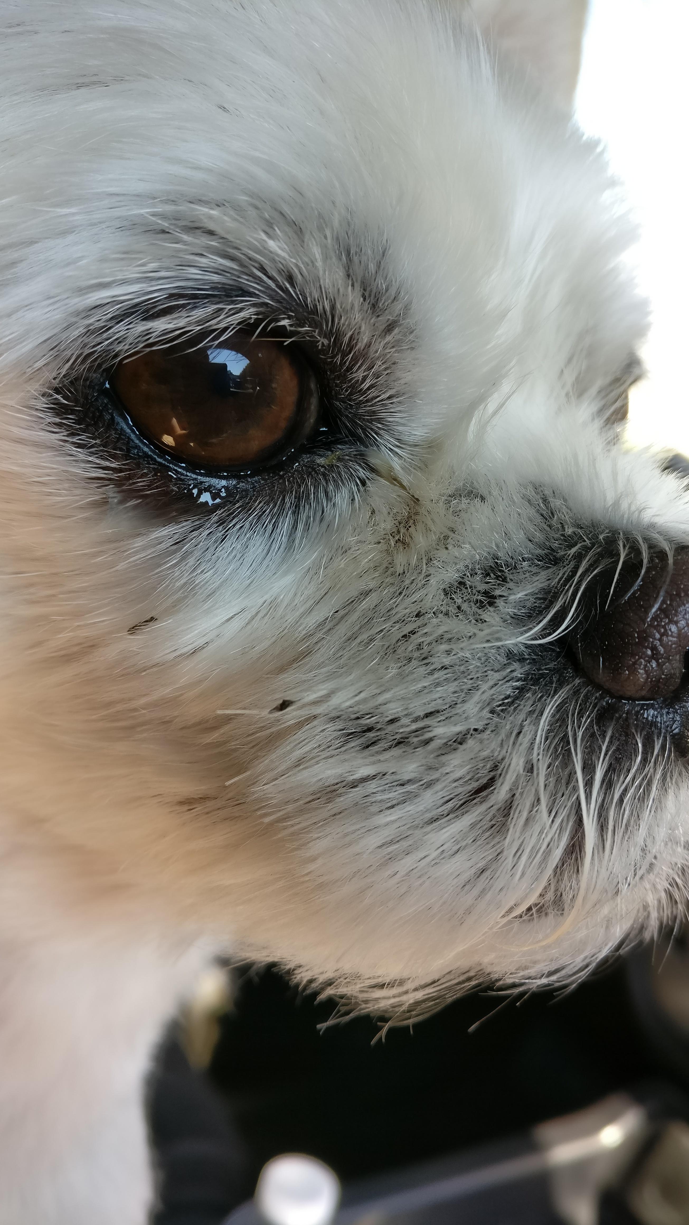 Darmowe Zdjęcia Biały Szczeniak Pies Kot ścieśniać Ludzkie