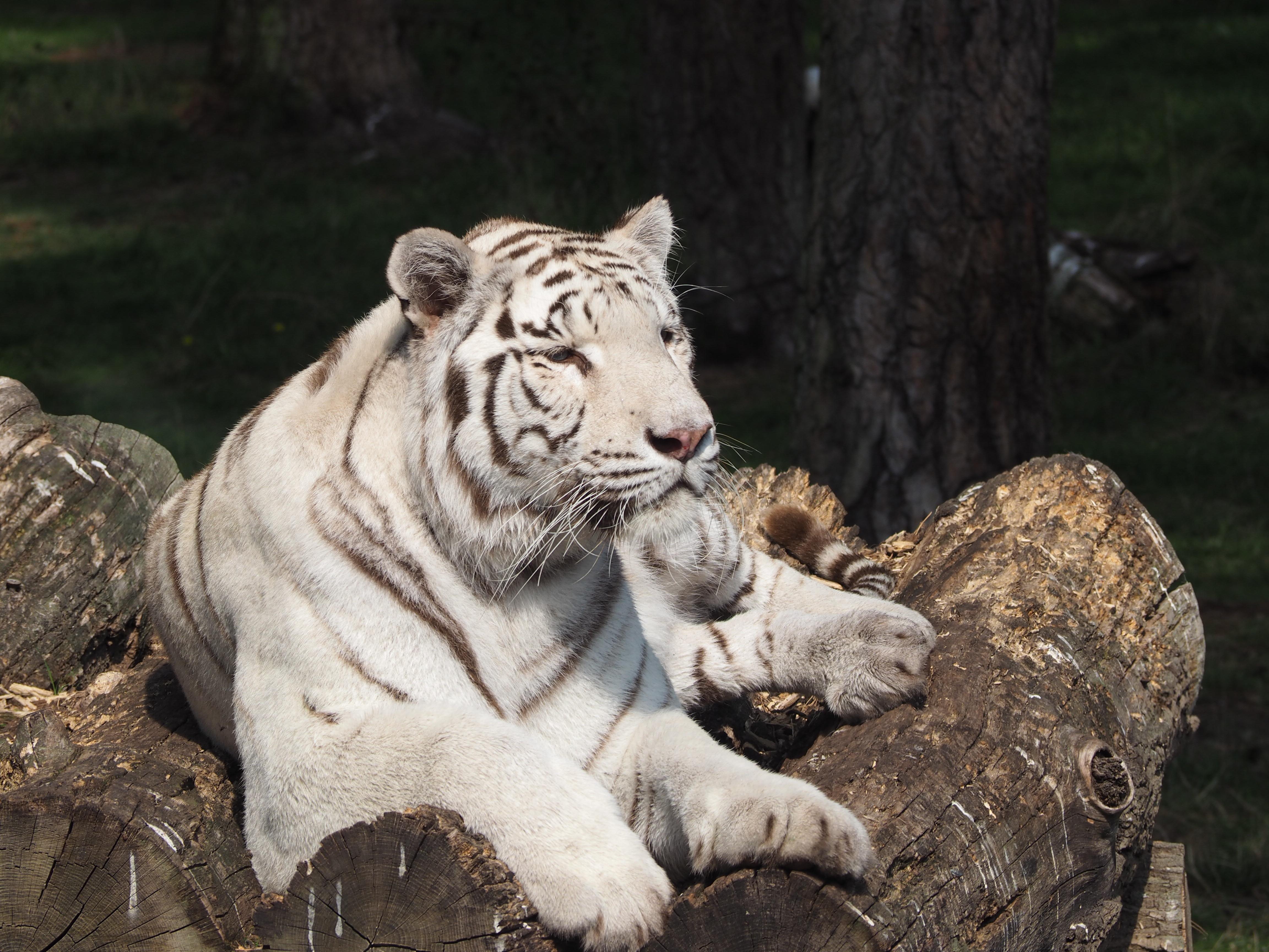 Gambar Putih Rekreasi Margasatwa Kebun Binatang Binatang