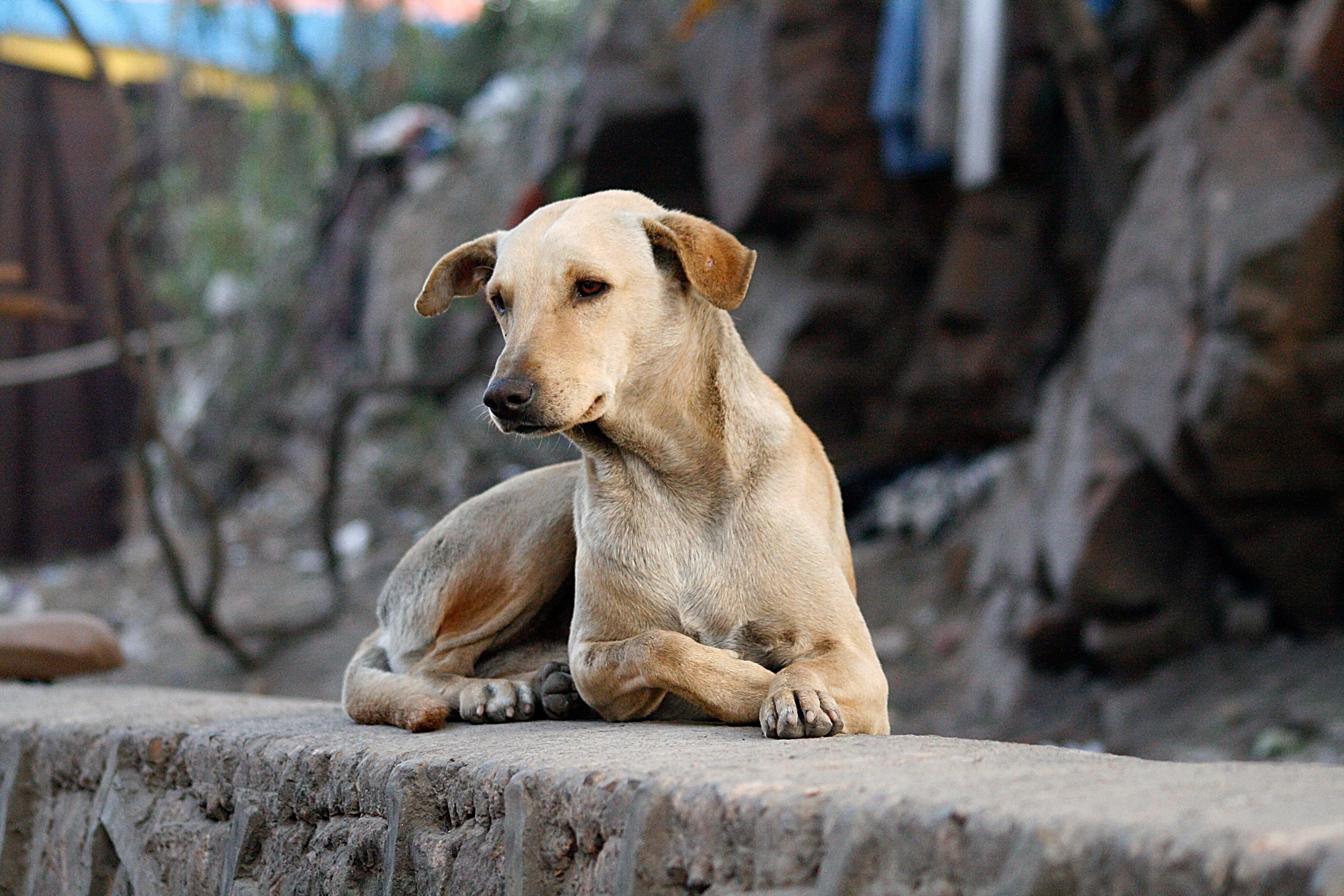Images gratuites blanc vue chiot vacances curiosit - Image patte de chien gratuite ...