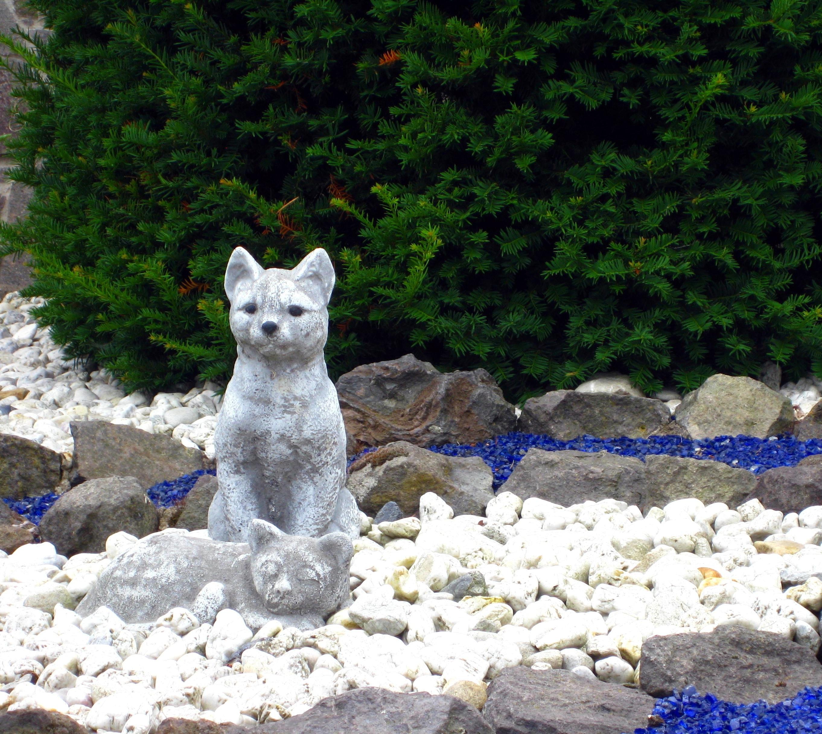 Gratis billeder : hvid, Zoo, kat, siddende, pattedyr, sten, grus ...