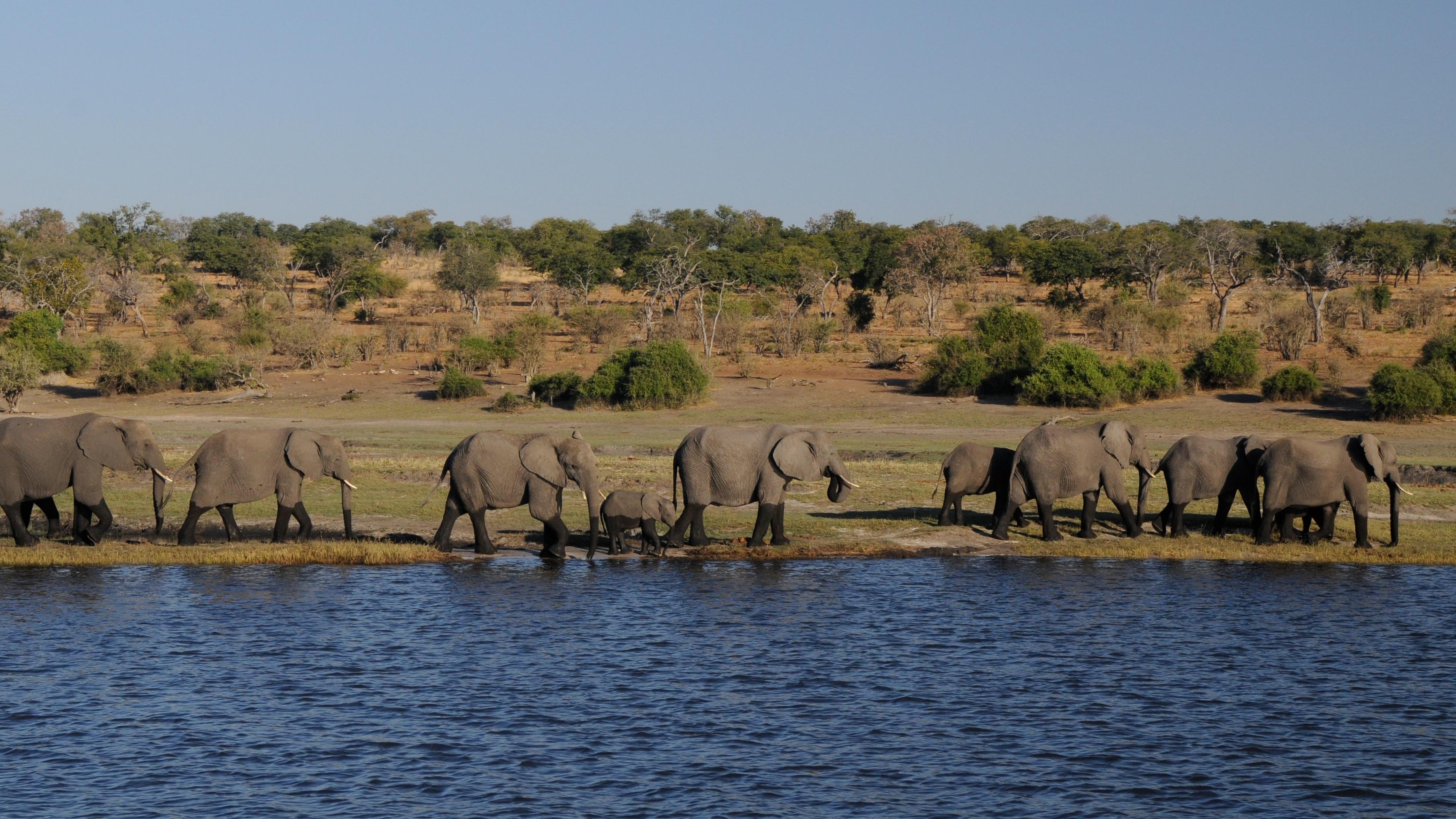 последовательном путешествия ботсвана фото дорожные