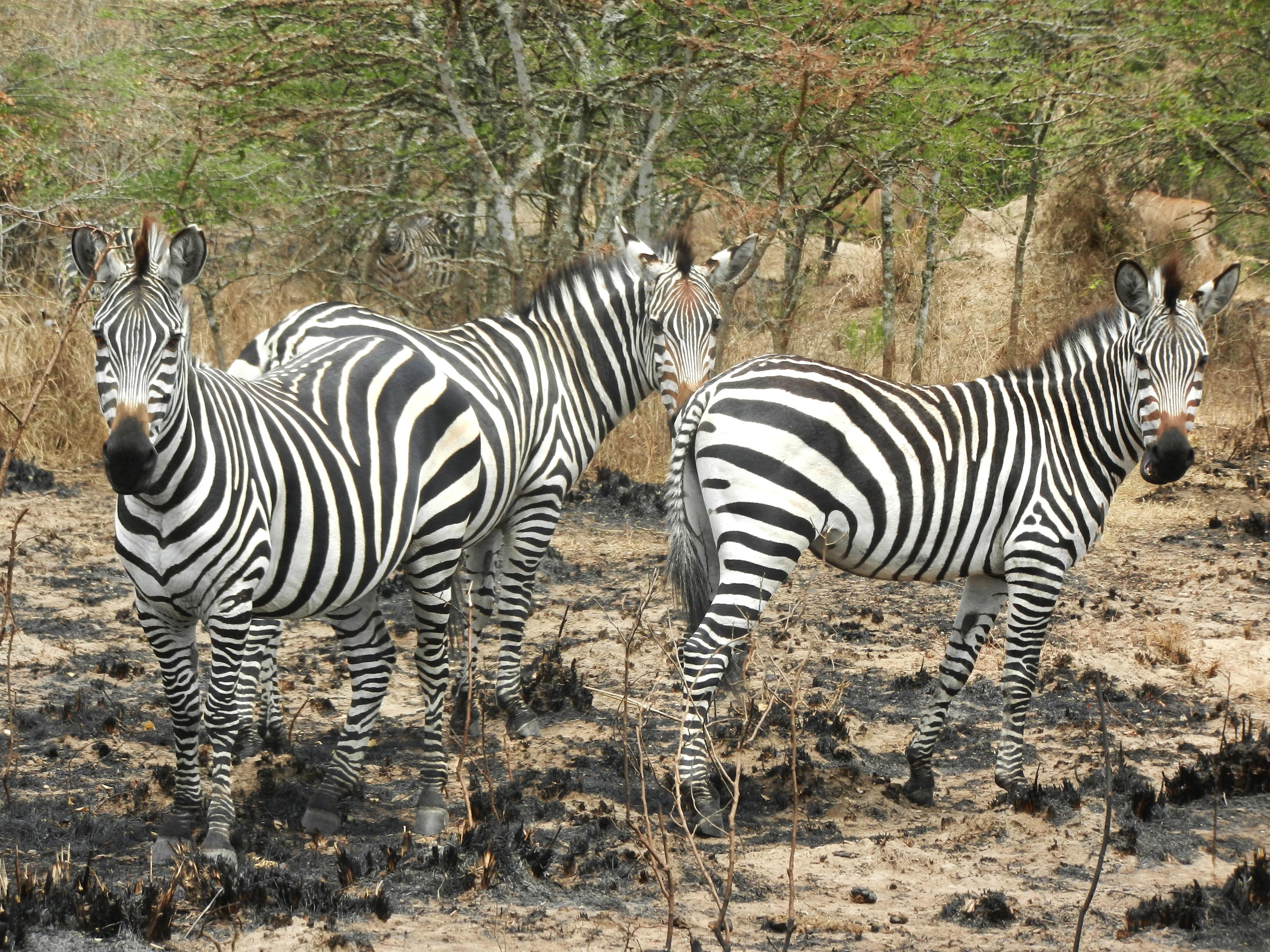 Images gratuites r gion sauvage noir et blanc aventure - Images d animaux sauvages gratuites ...