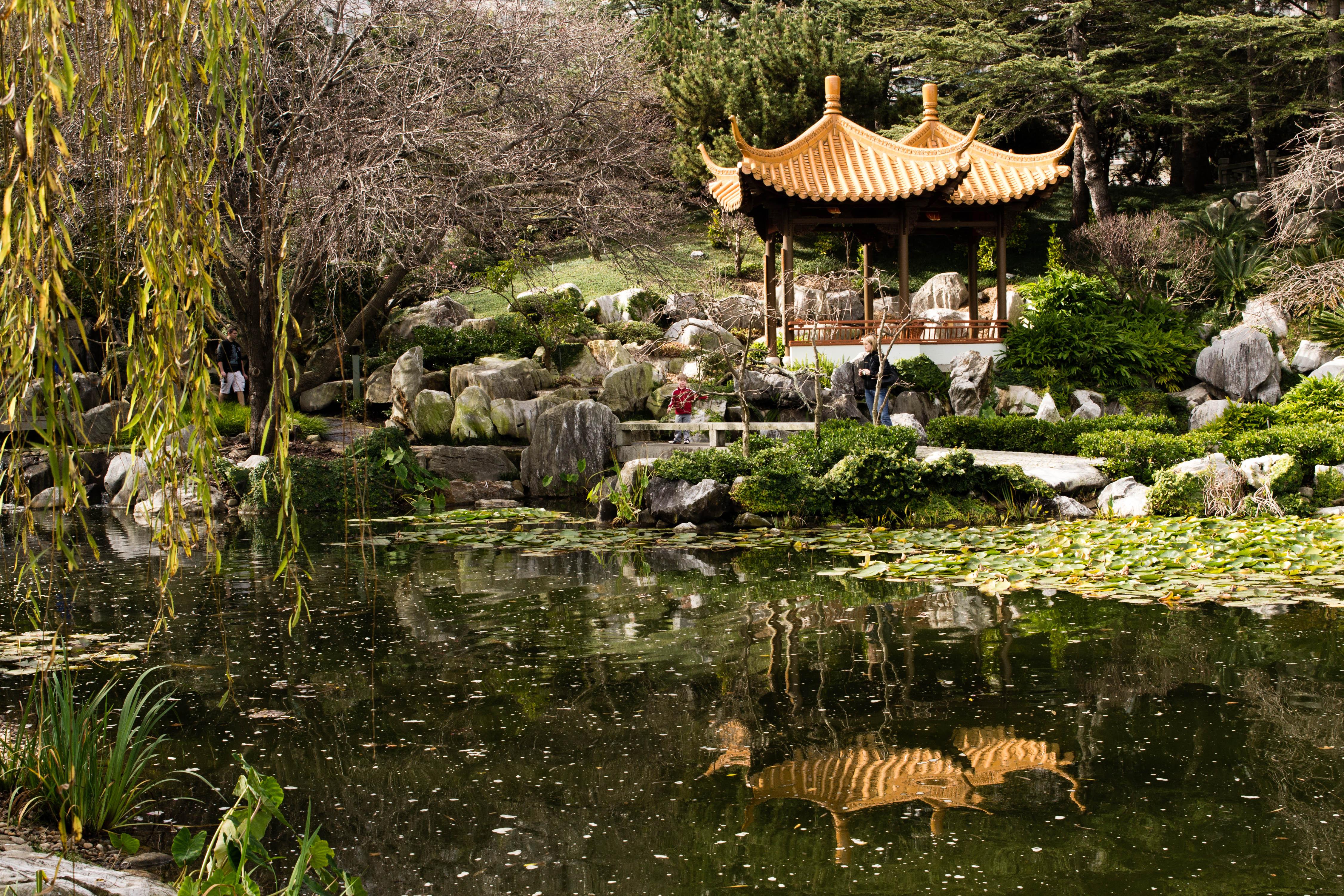 Free Images : wilderness, flower, pond, jungle, botany, flora ...