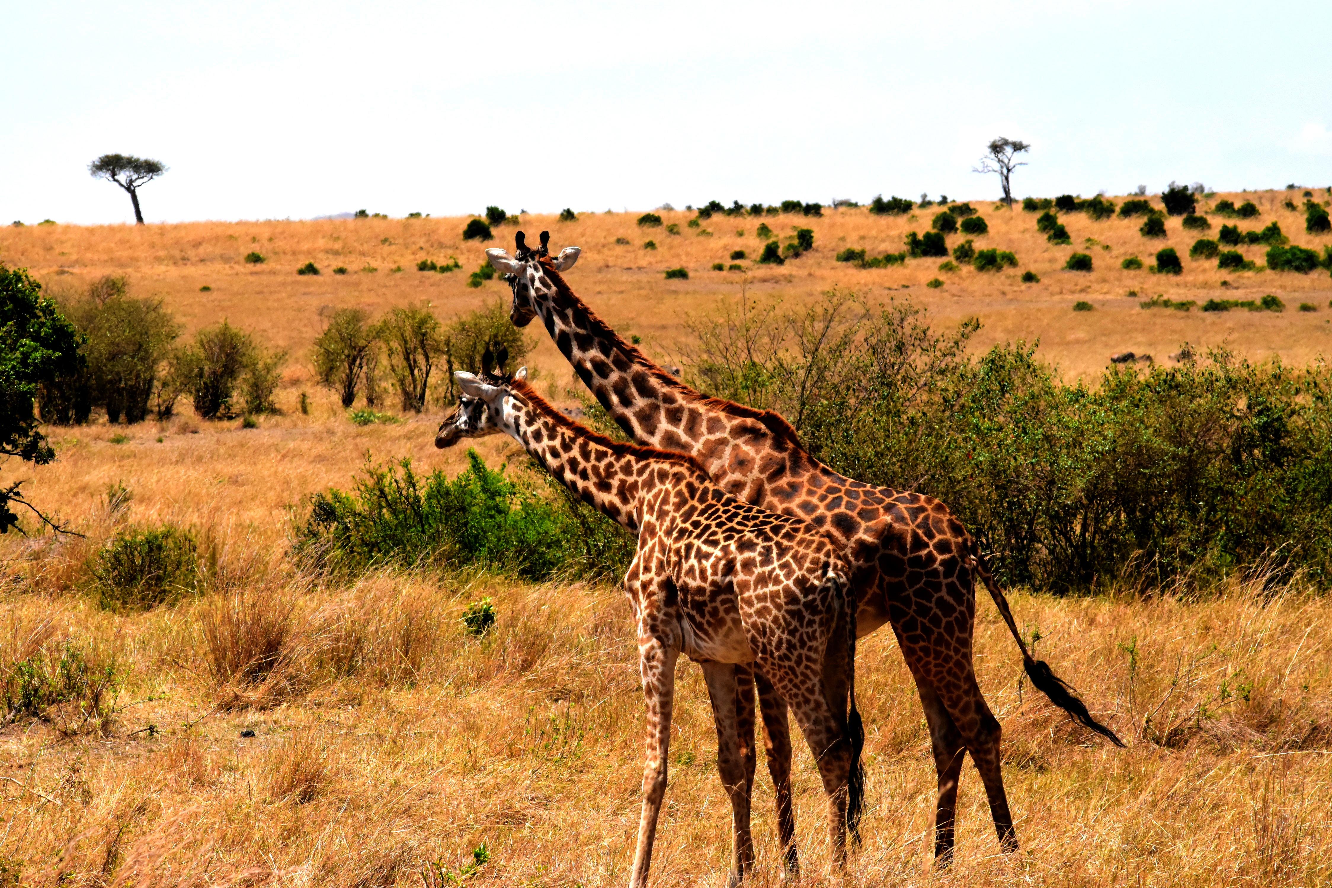 Африка фото и картинки