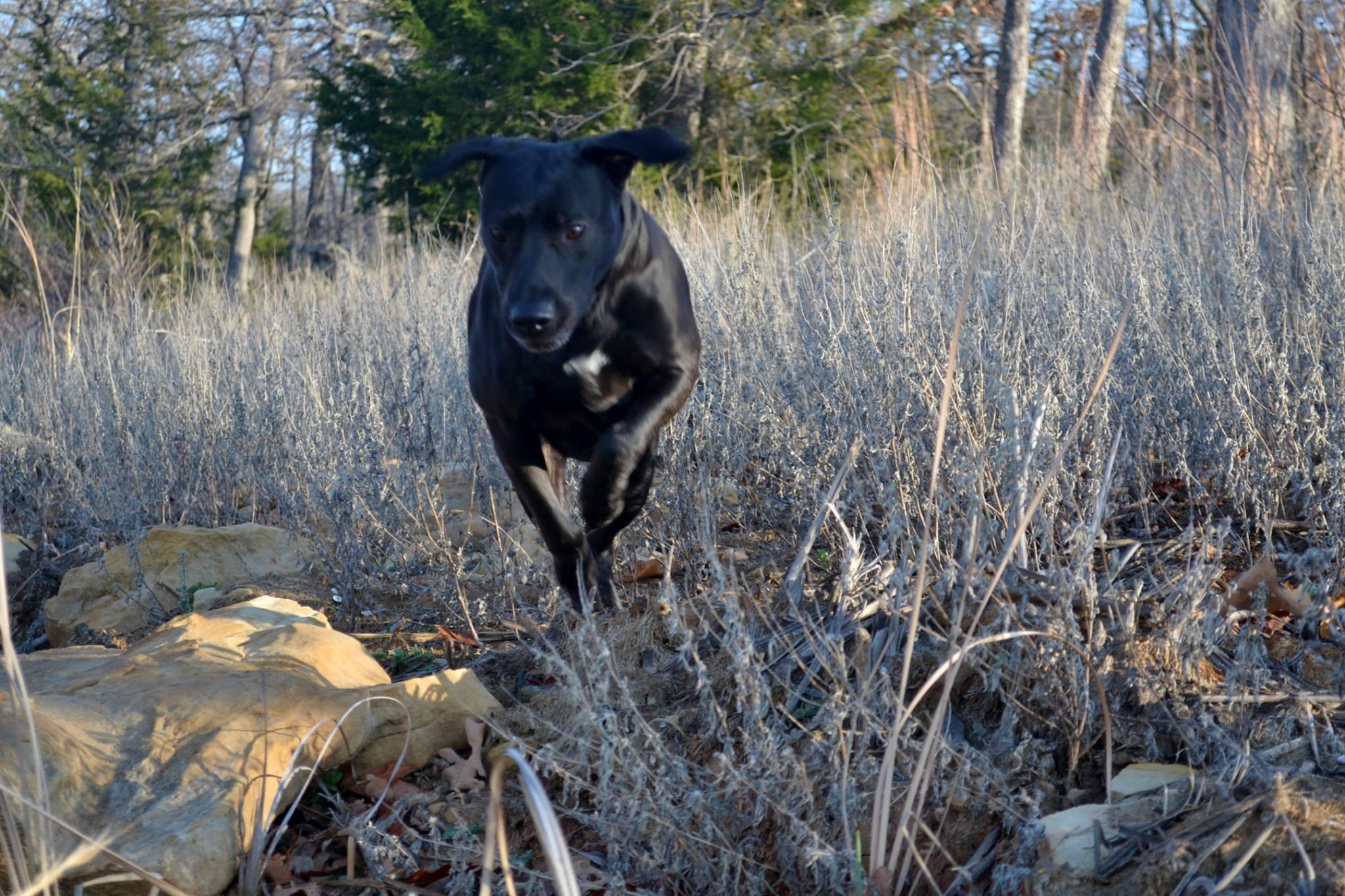 Images gratuites r gion sauvage fonctionnement chien - Images d animaux sauvages gratuites ...