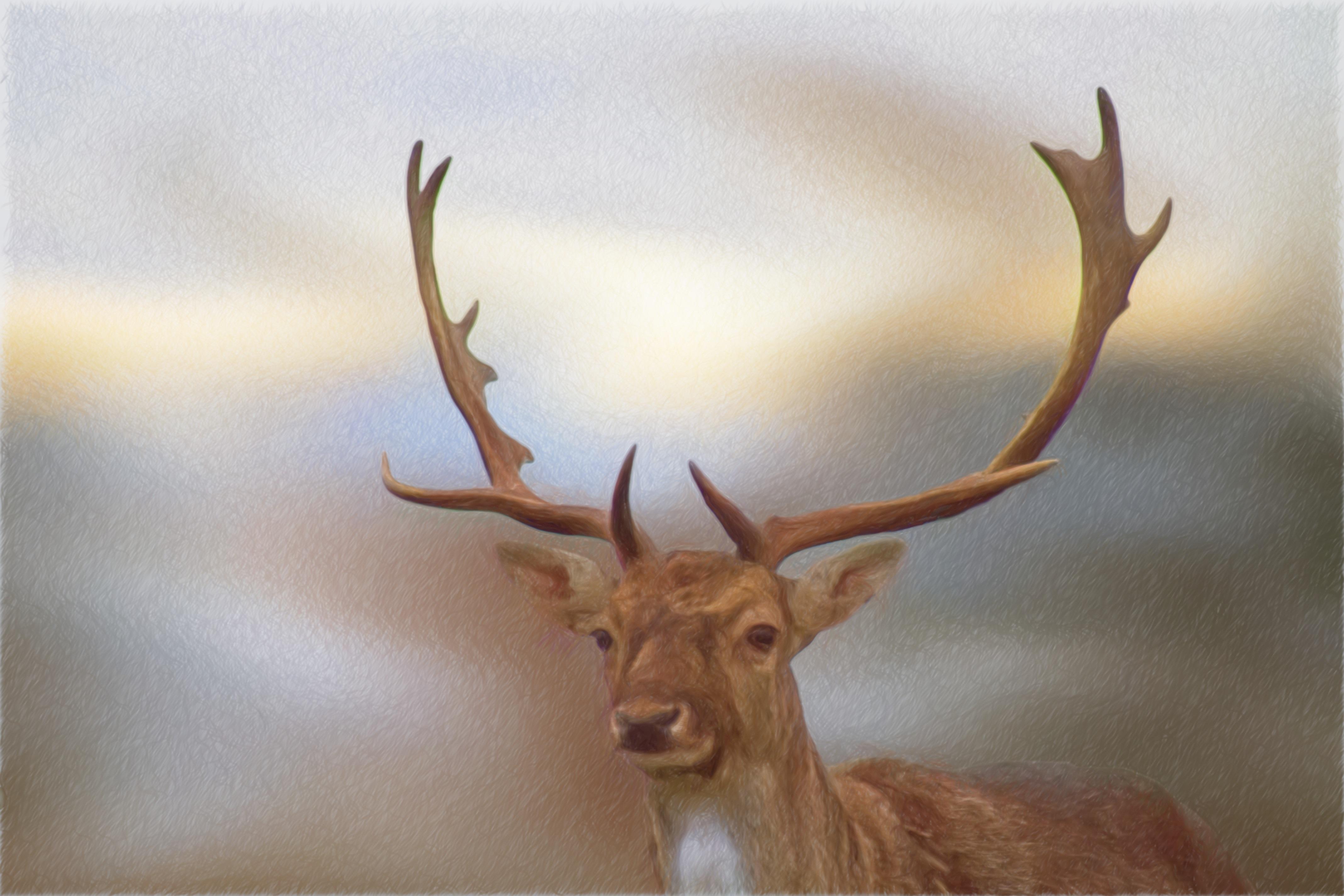 Fotos Gratis Fauna Silvestre Ciervo Cuerno Mamífero Material