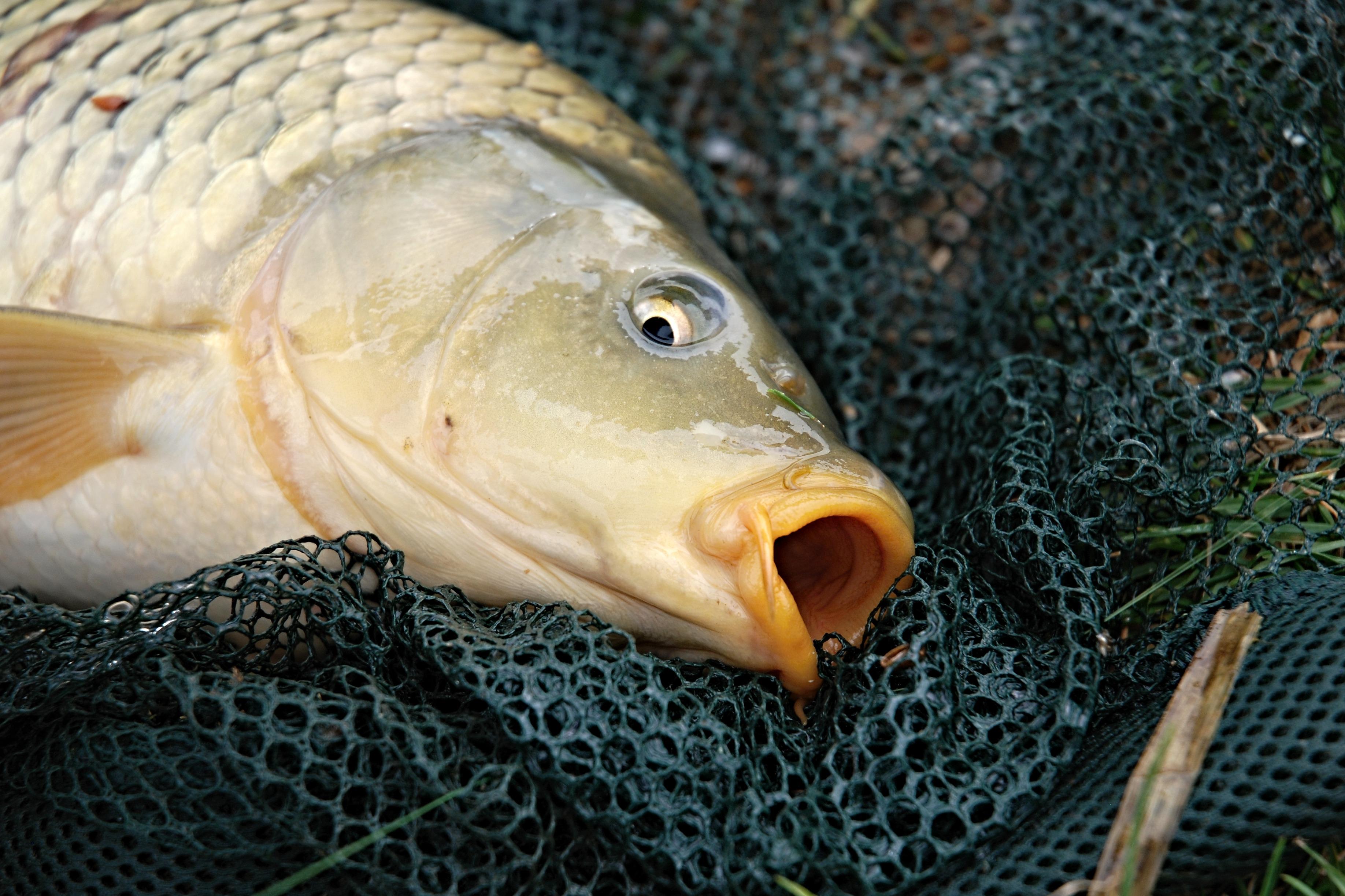 Рыбу поймала картинка