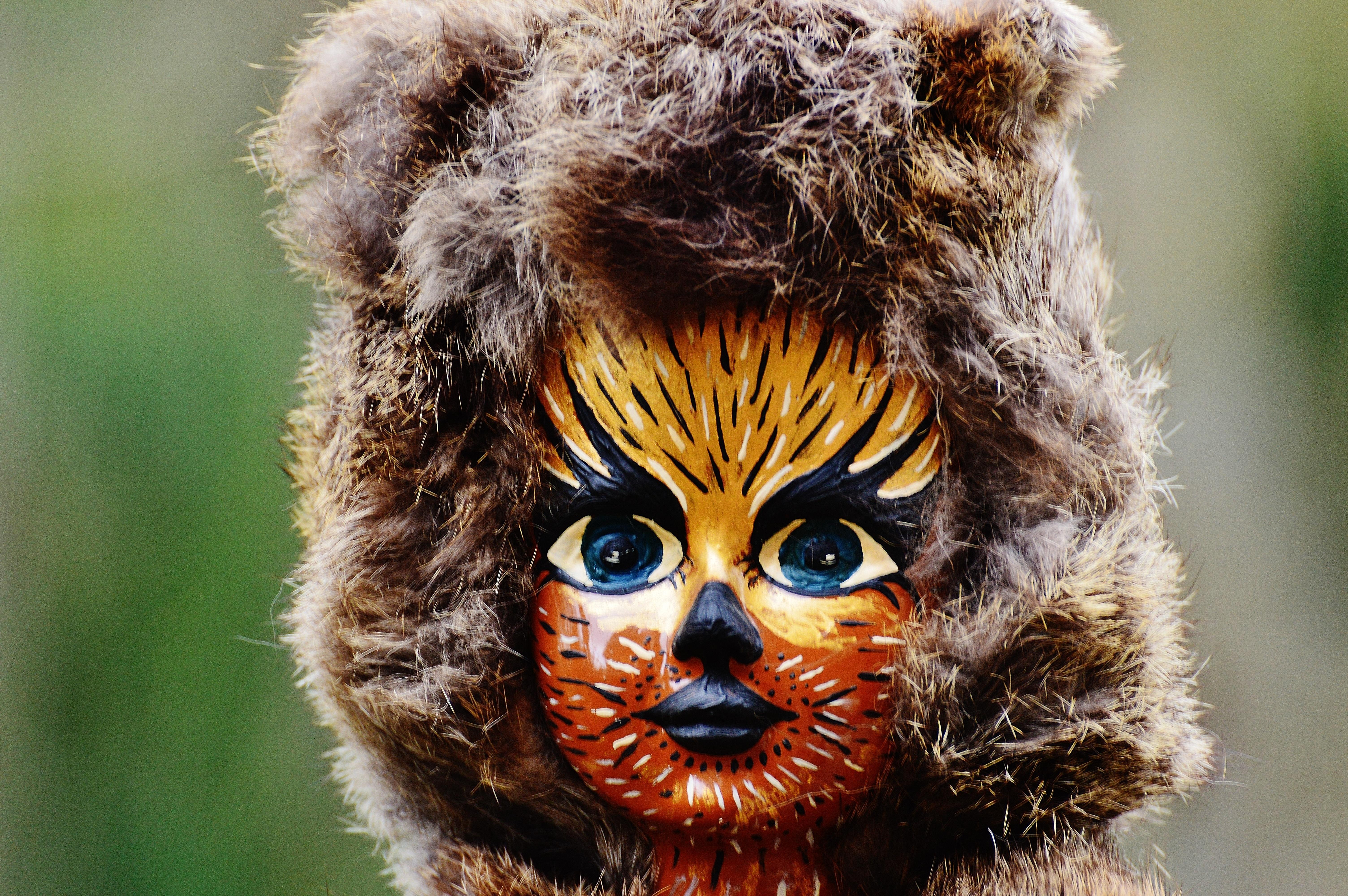 Fotoğraf Vahşi Hayat Kürk Karnaval Kedi Renk Memeli Fauna