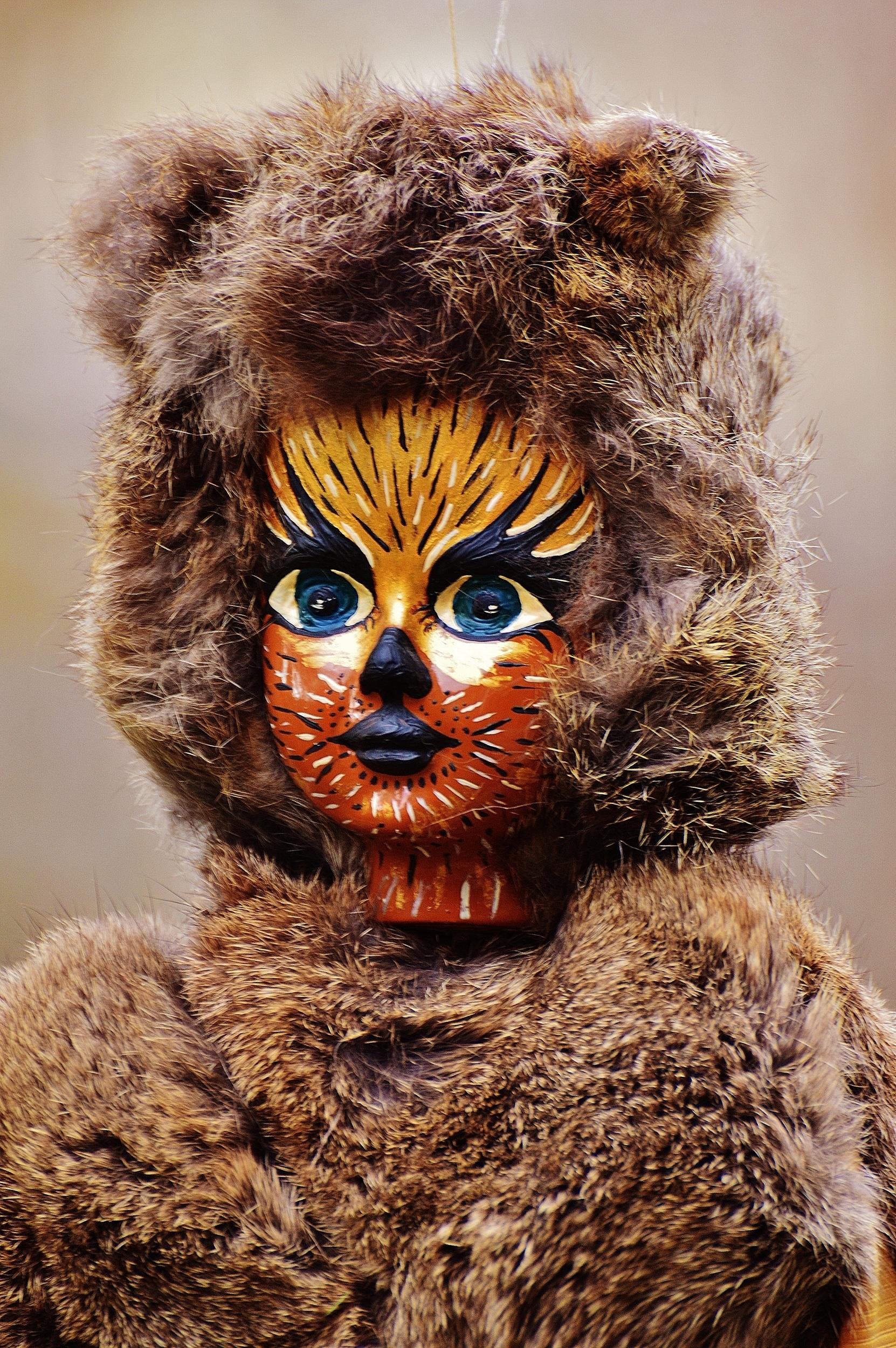 Fotoğraf Vahşi Hayat Kürk Karnaval Kedi Renk Memeli Boyama