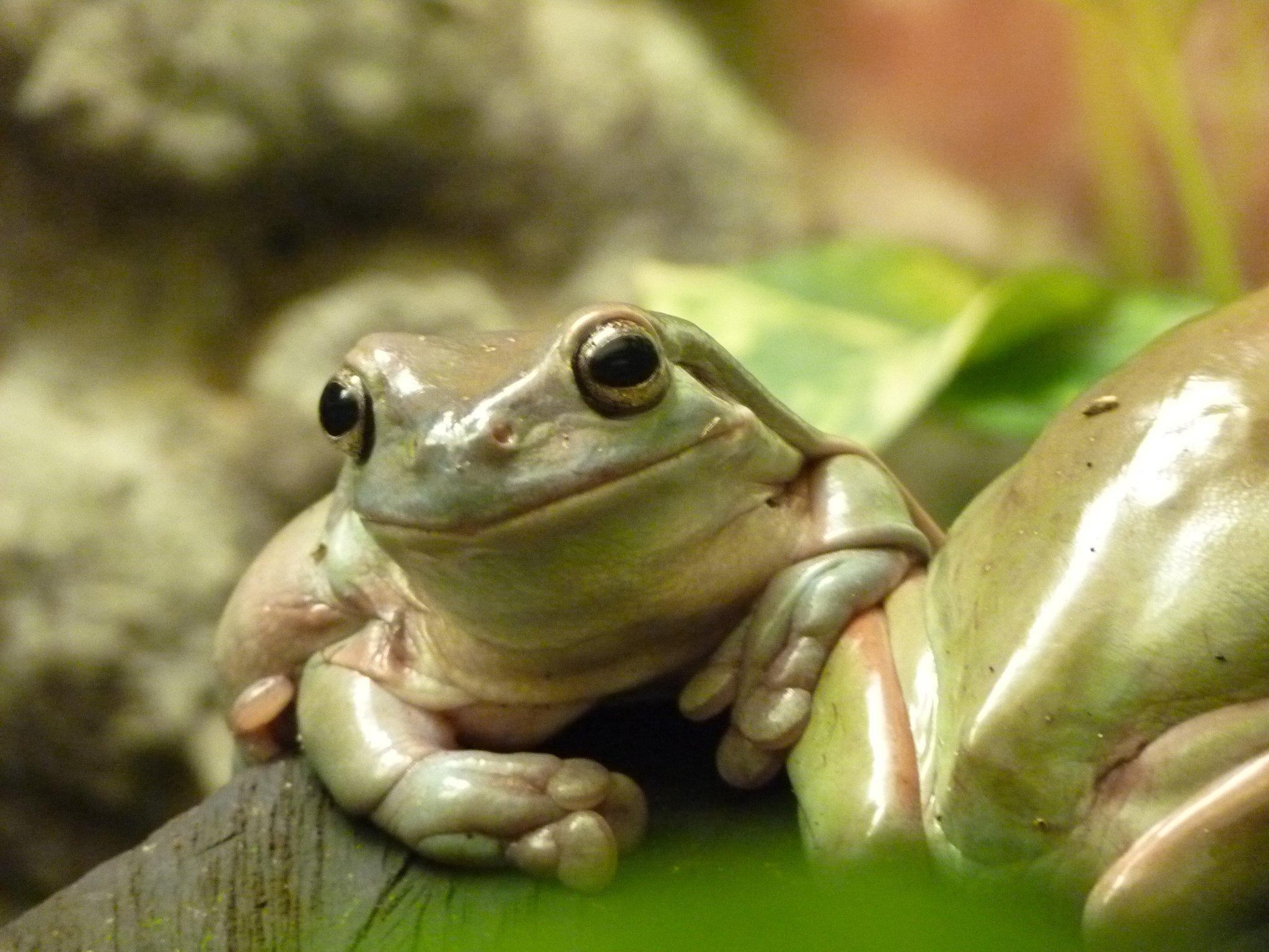 Kostenlos frosch bilder Ausmalbilder Frosch