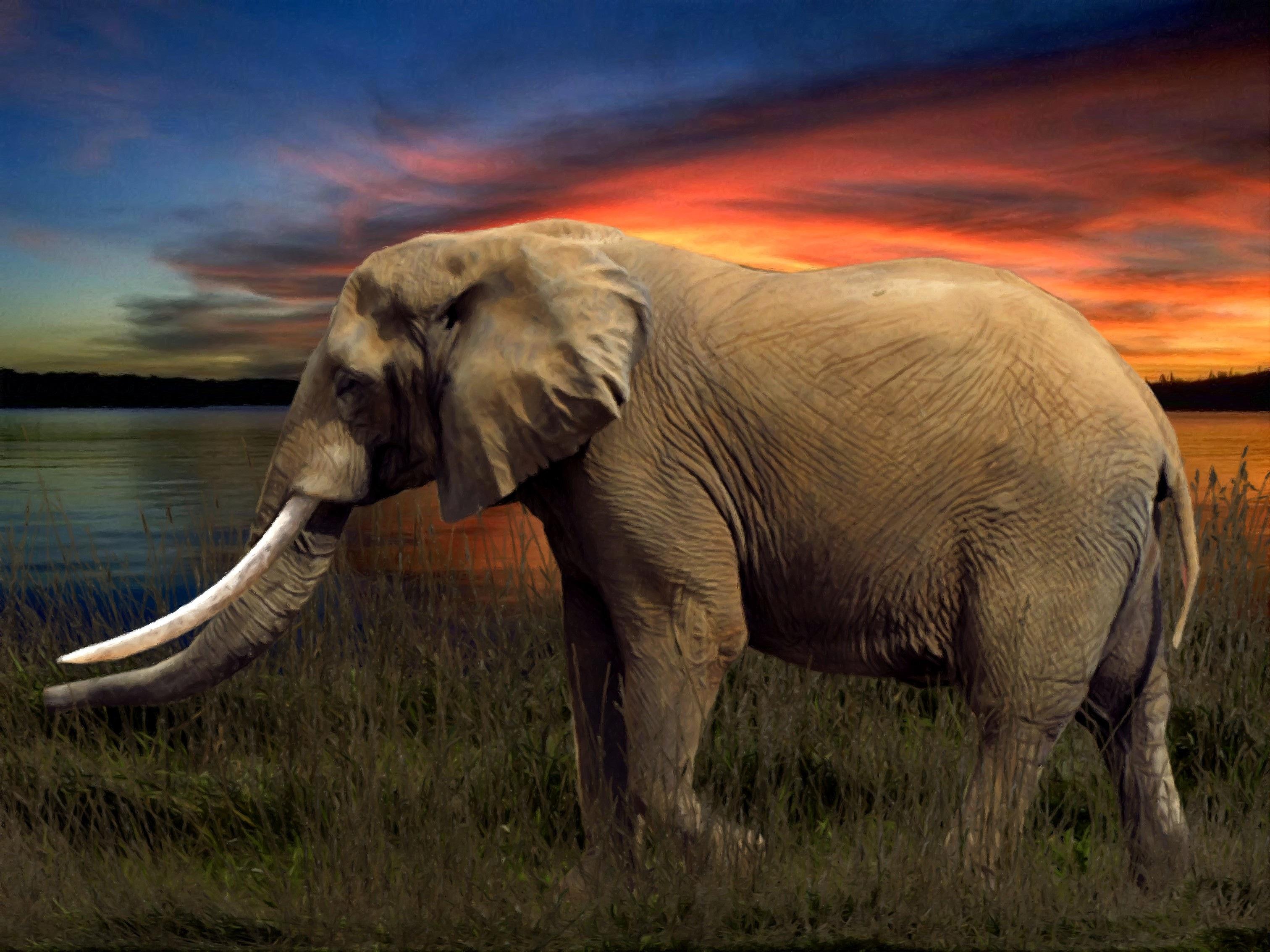 free images wildlife herd mammal fauna savanna arrangement