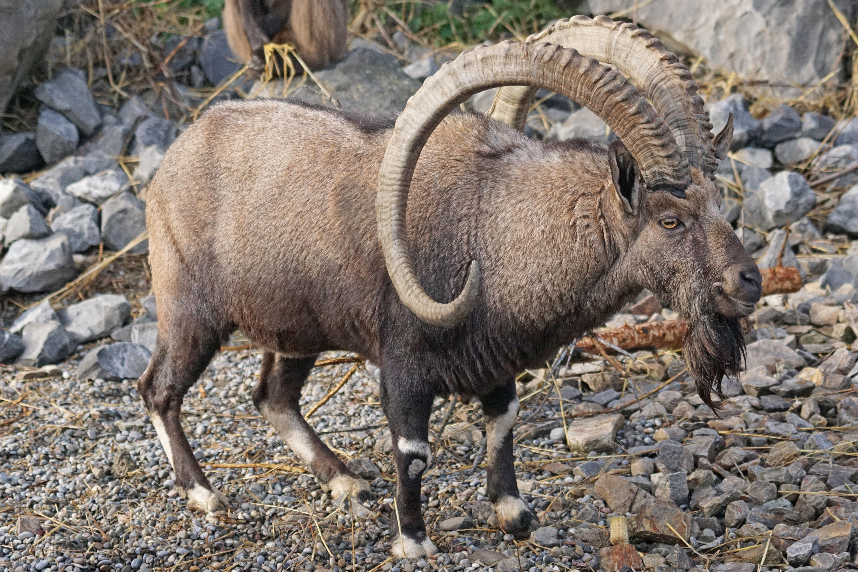 Gambar Margasatwa Kawanan Binatang Menyusui Fauna Hewan