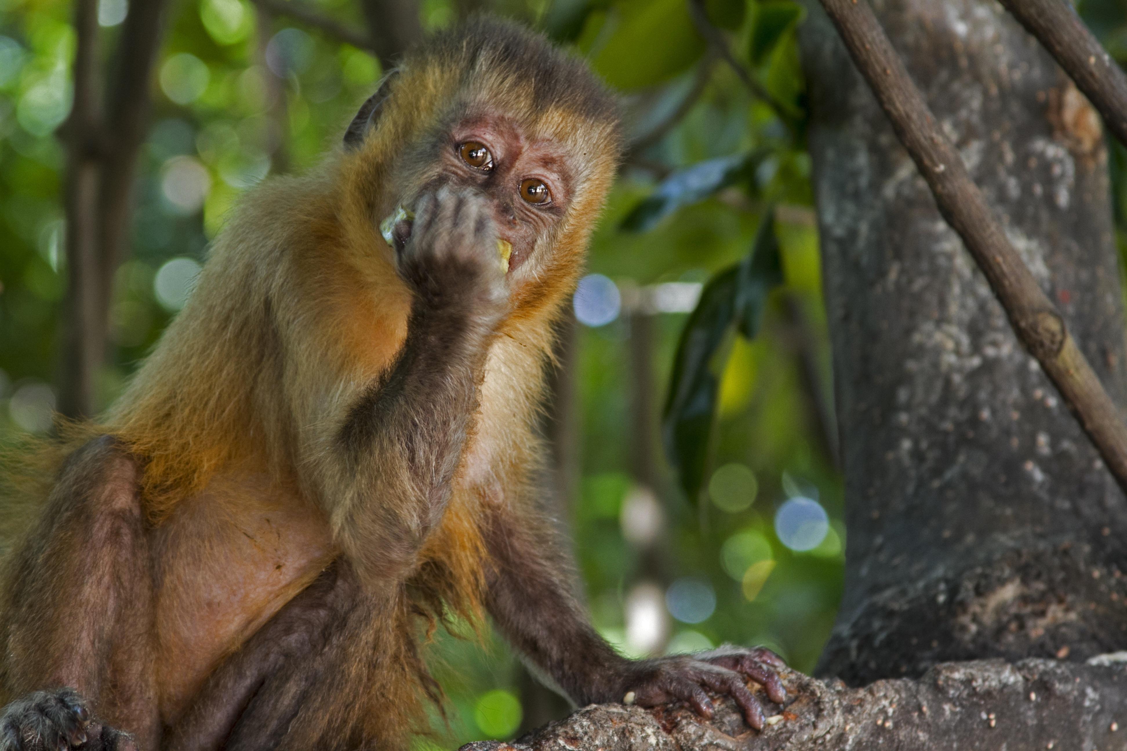 картинки диких обезьян можно погладить взять
