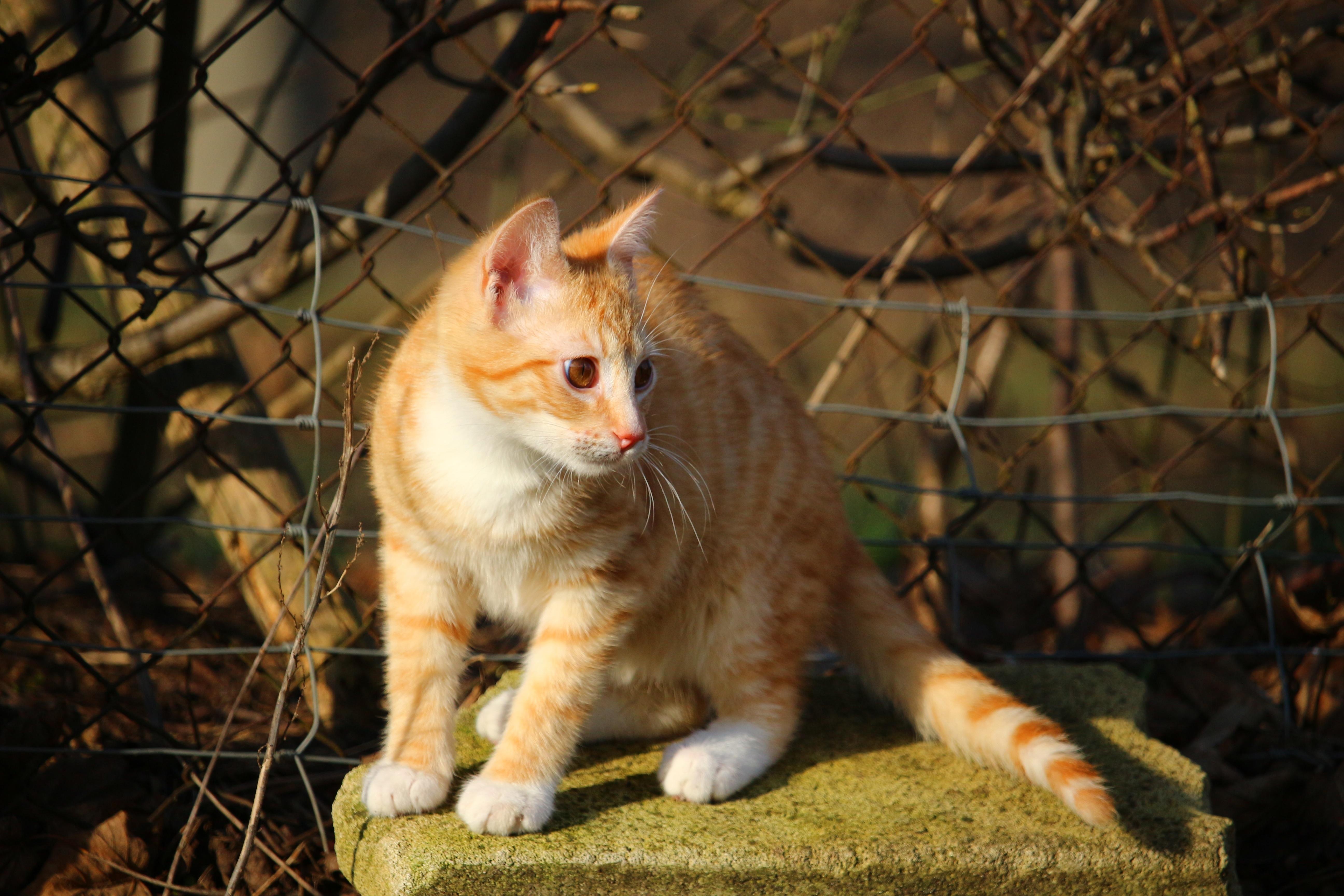 89 Gambar Gambar Kucing Harimau Kekinian
