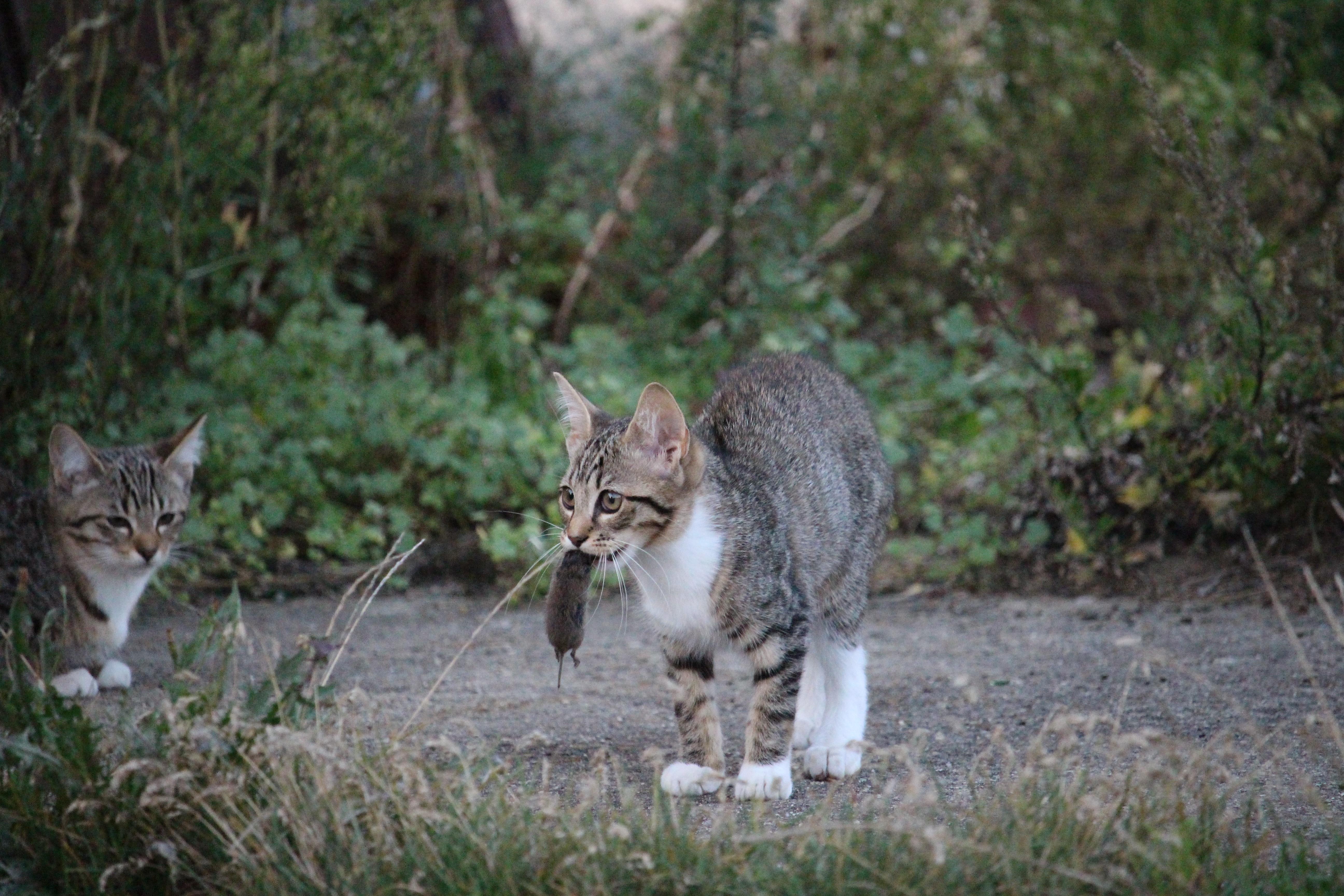 коты на охоте фото улицах