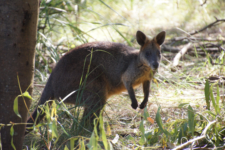 Картинки природы и животных австралии