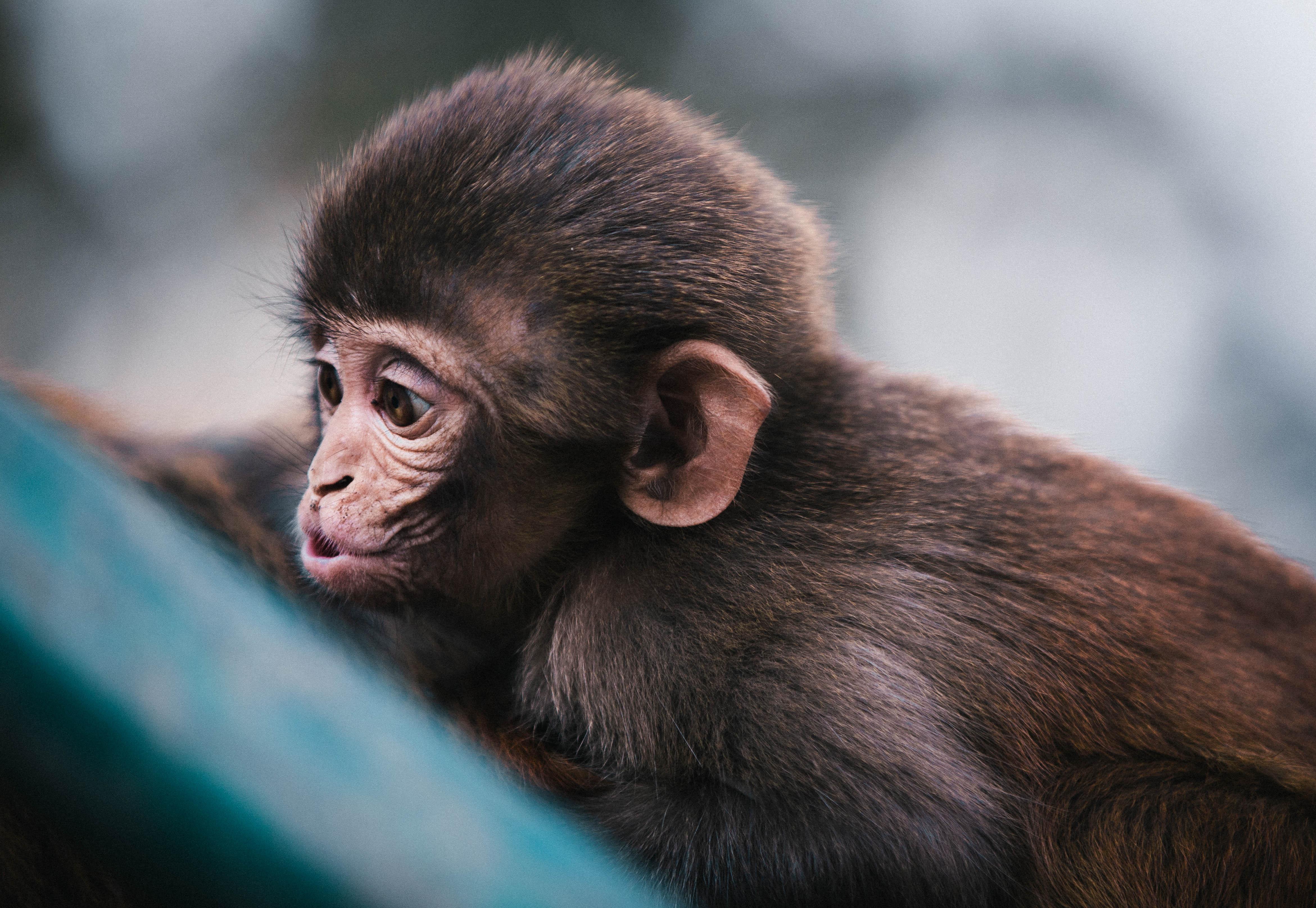 минус картинка обезьянка в мире знаете анекдоты