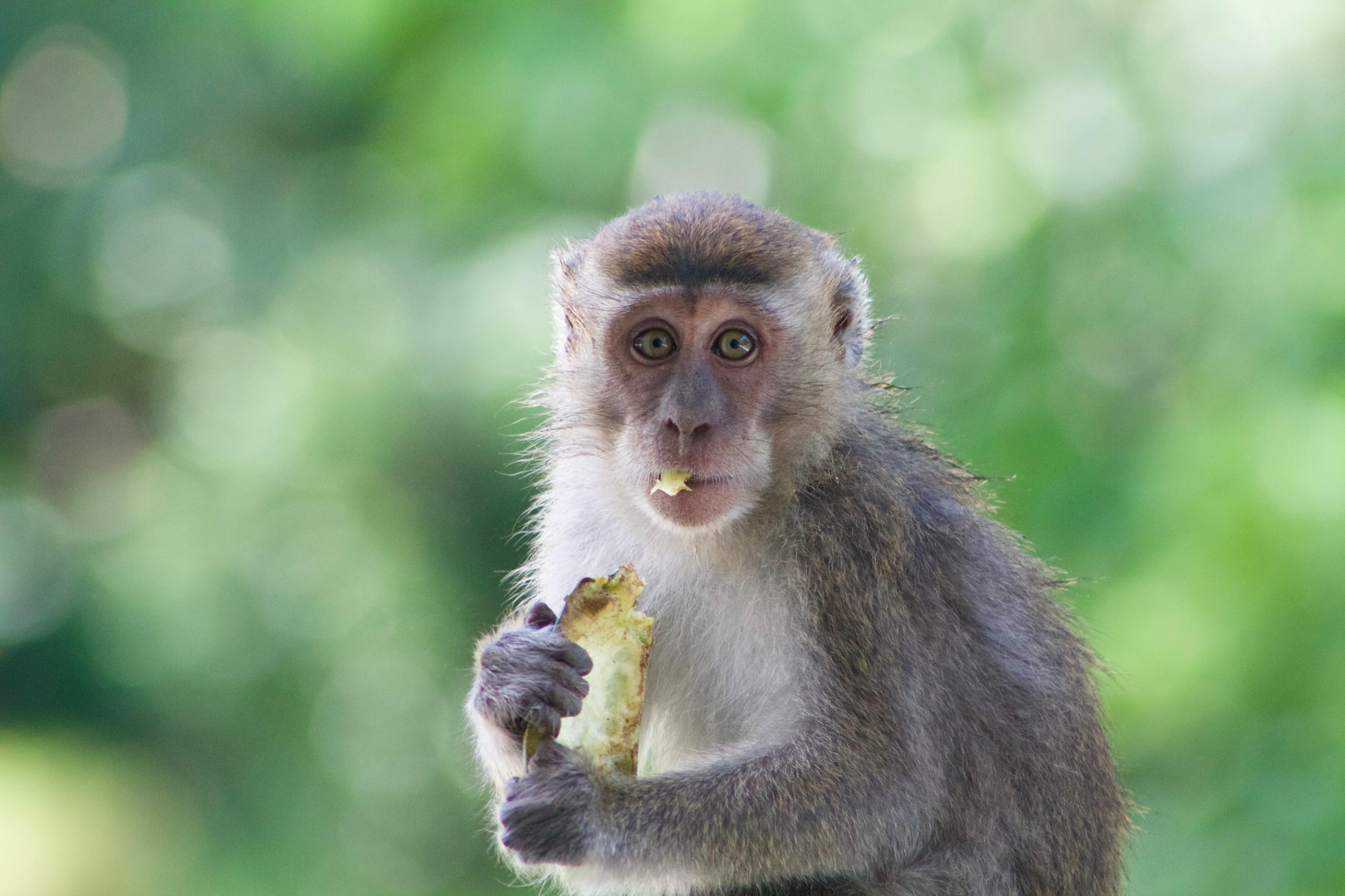 это обезьянка в картинках фото тех пор