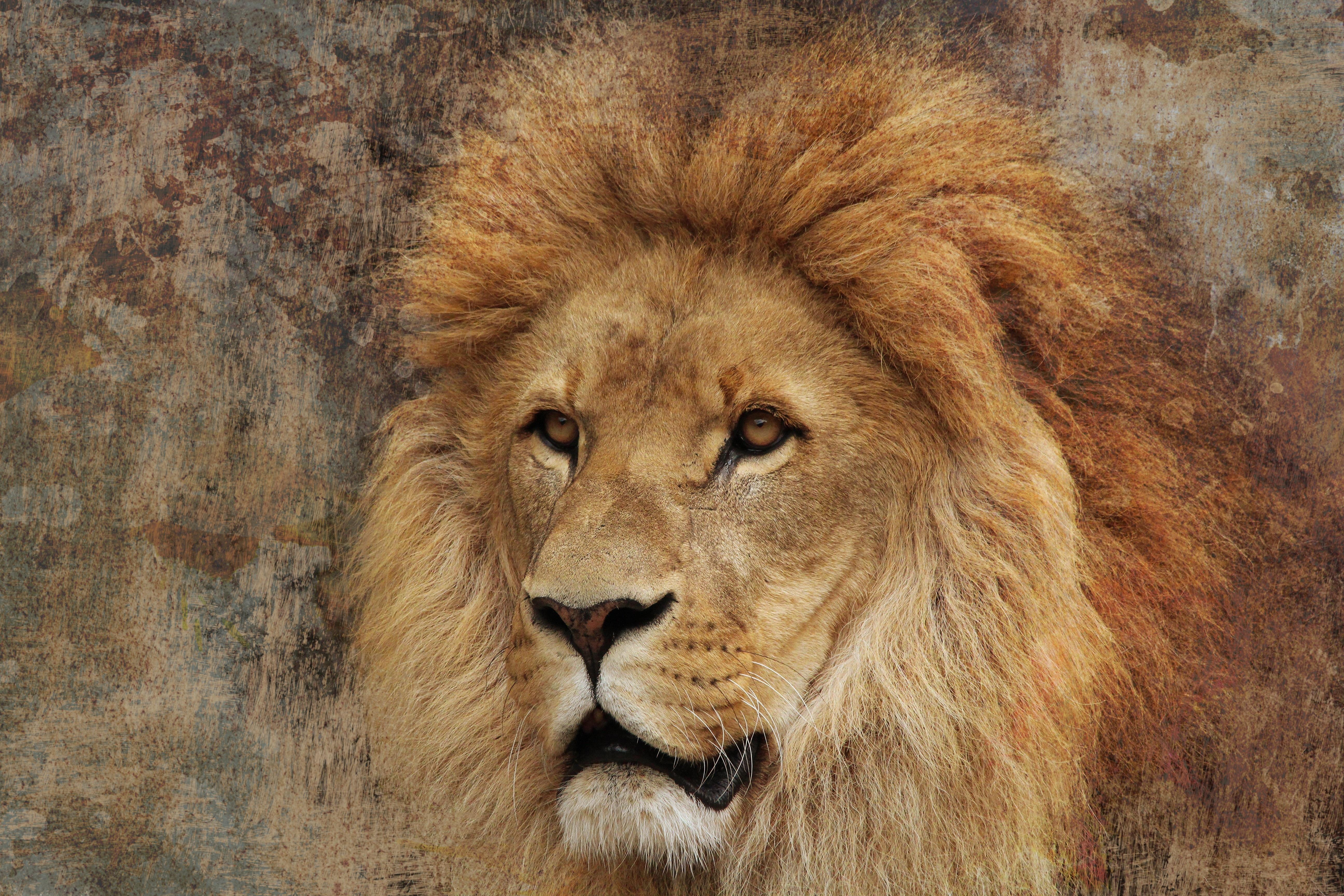 Образ льва картинки