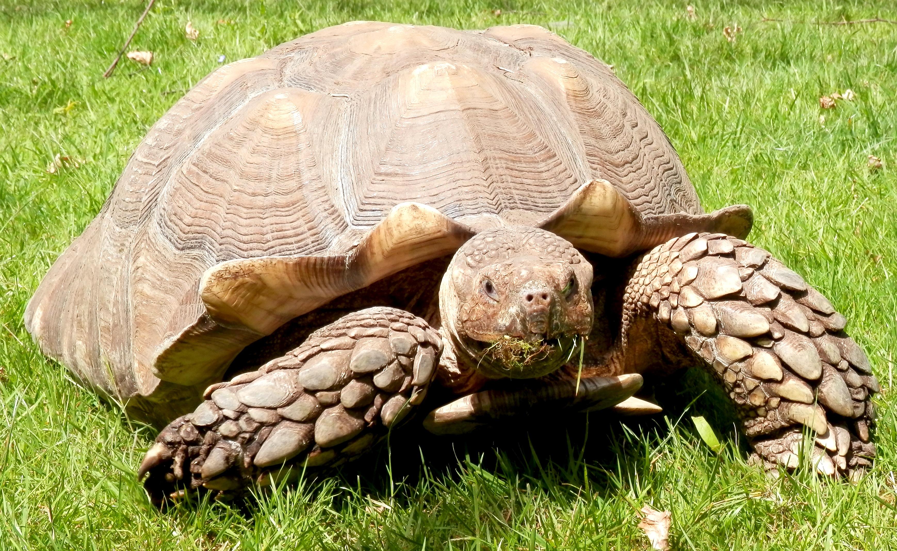 картинки черепаха из м фото четверть века компания