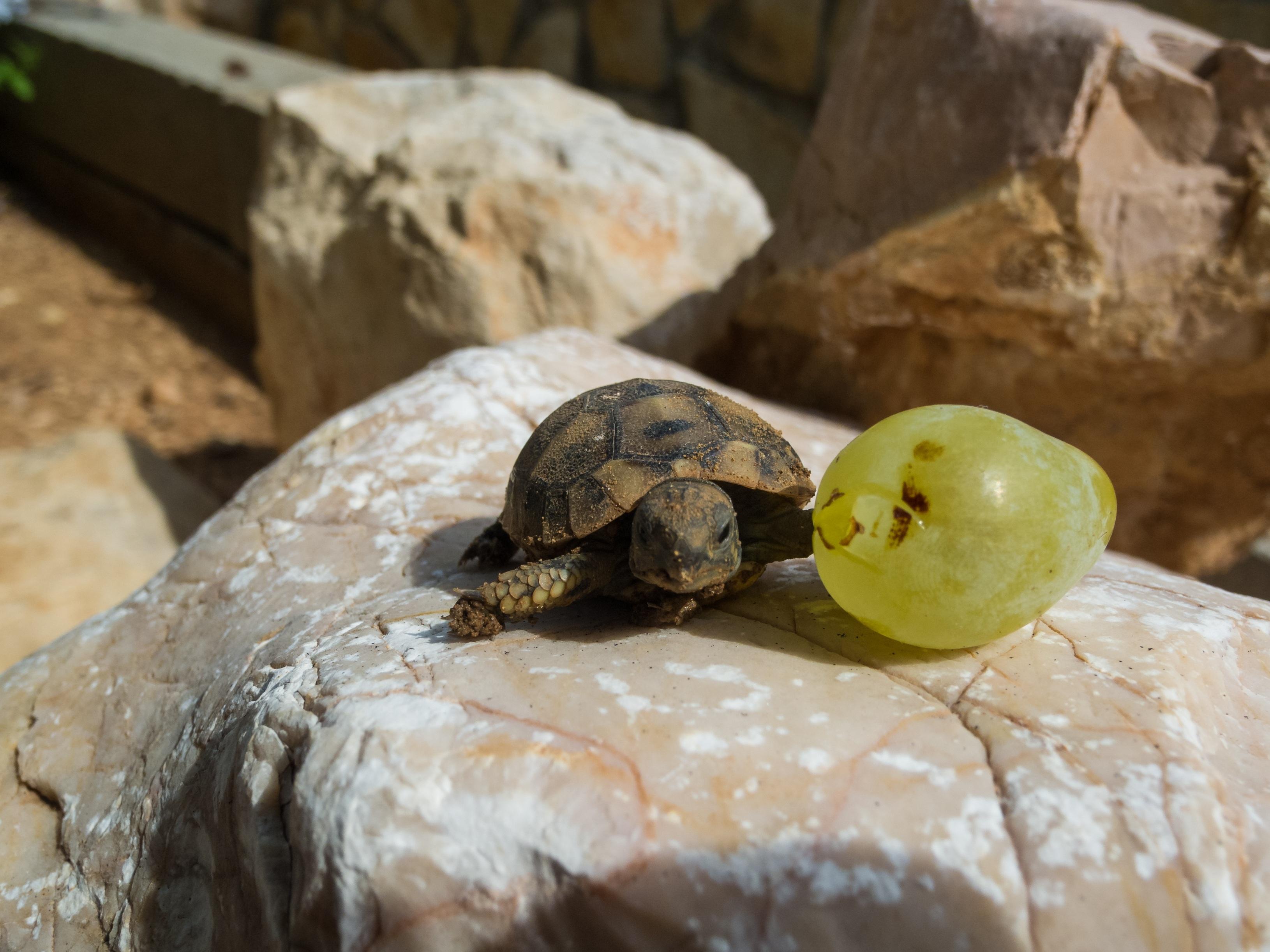 такого спячка черепах в картинках мастеров