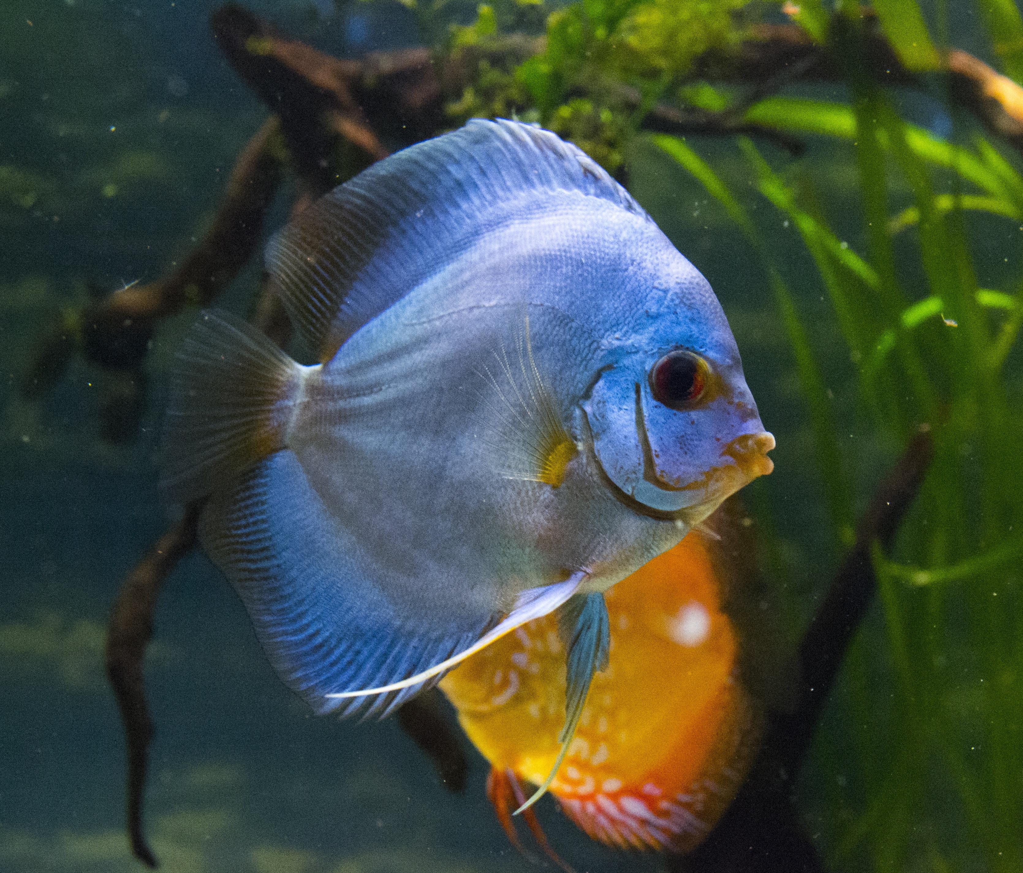 все картинки домашних рыб призывы