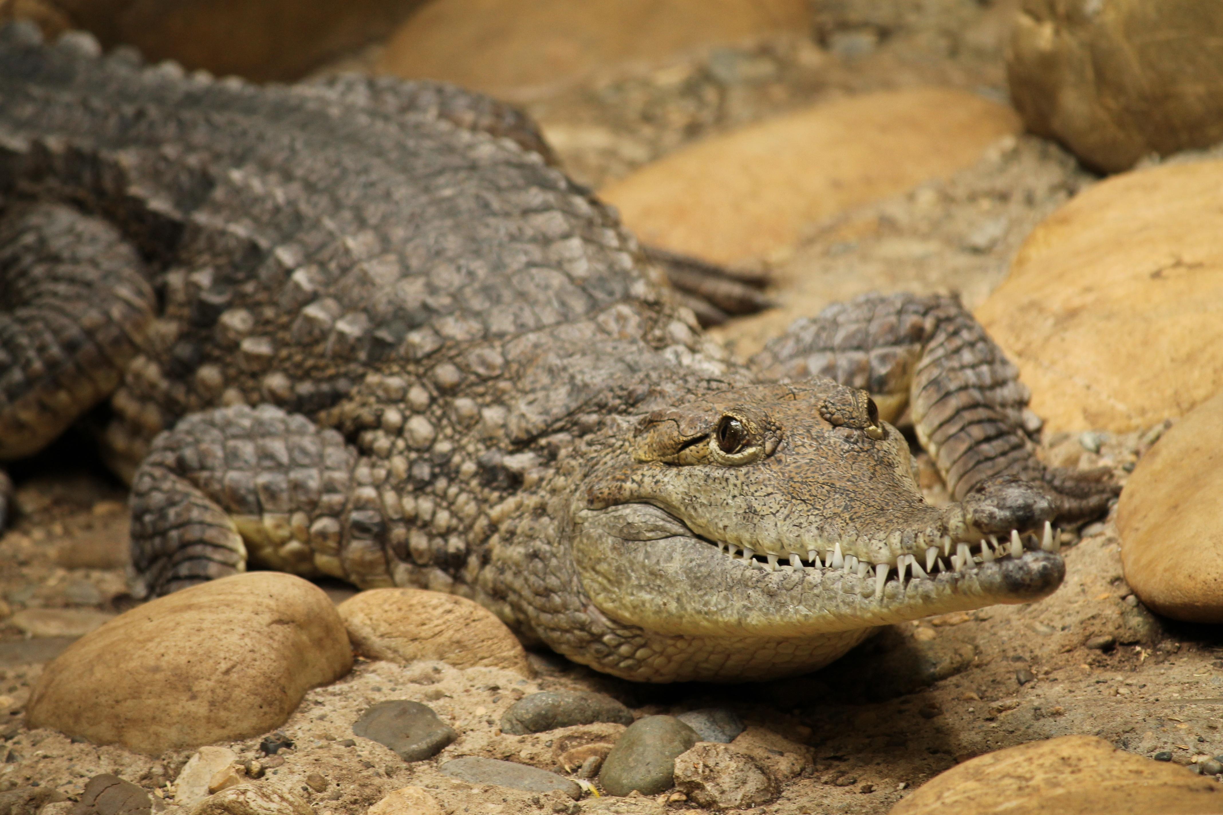 прекрасного картинки крокодилов и змей том, насколько
