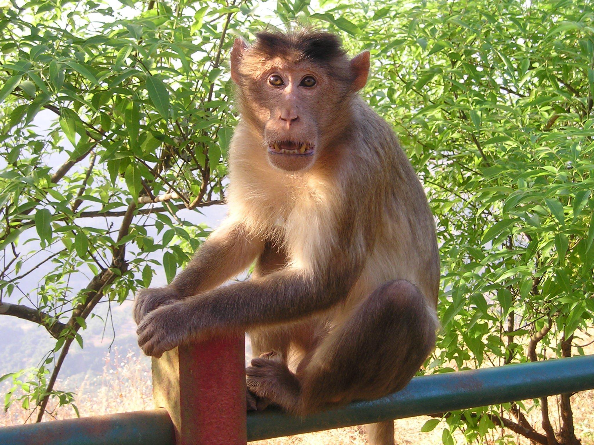 картинки диких обезьян был очень
