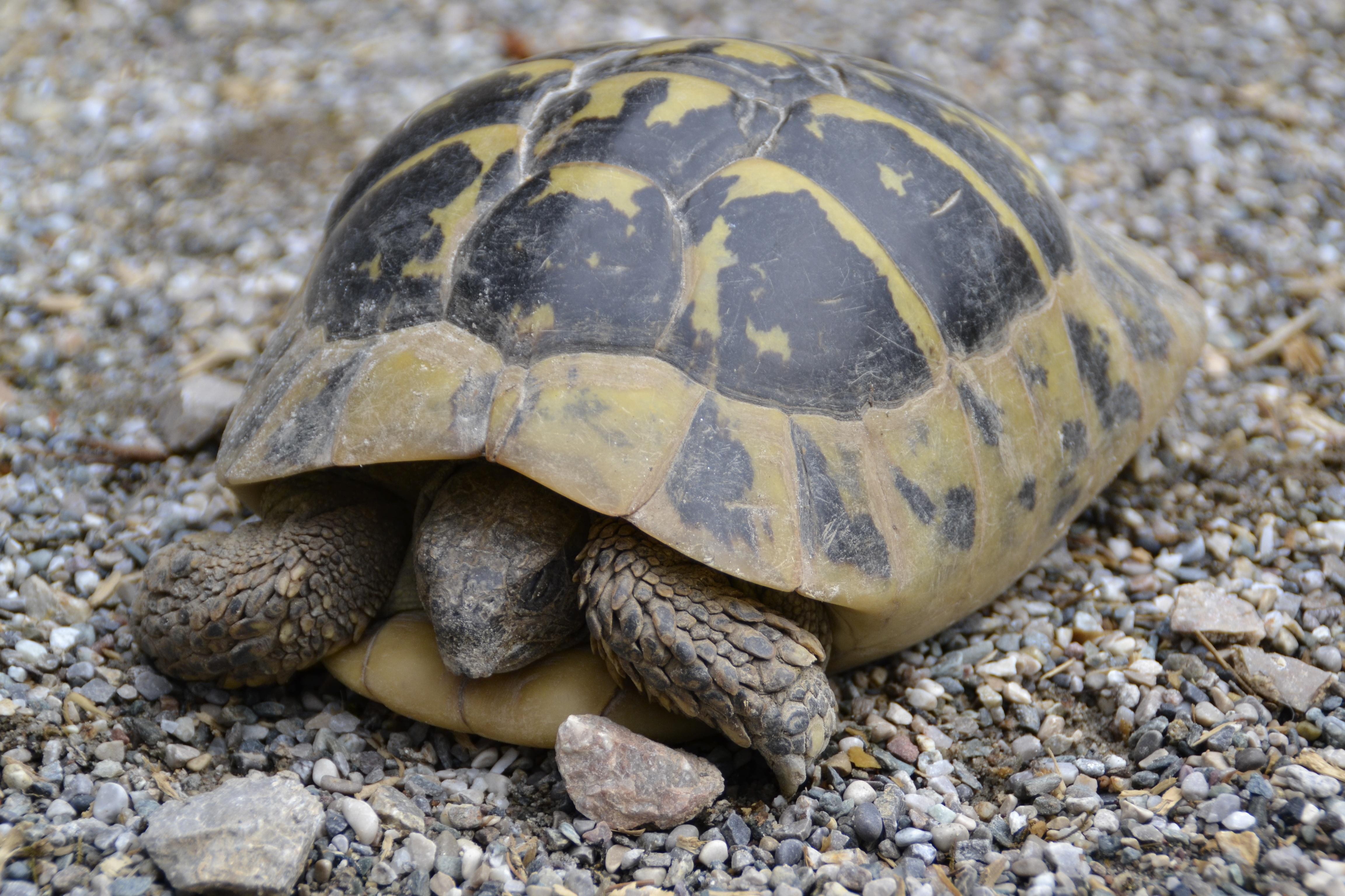 вас спячка черепах в картинках осветили, промелькнул там