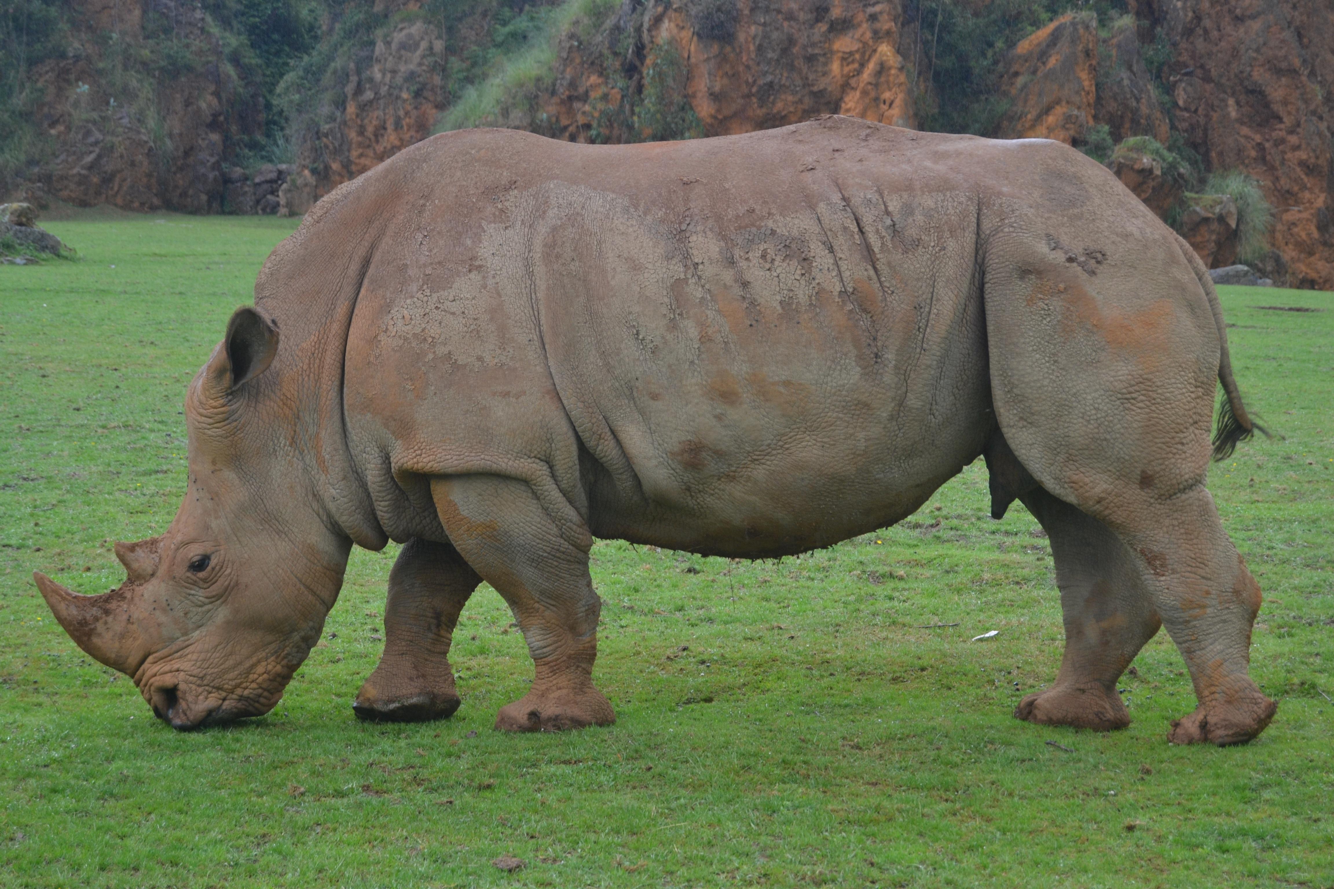 Rhino Tears Jewellery - Home | Facebook