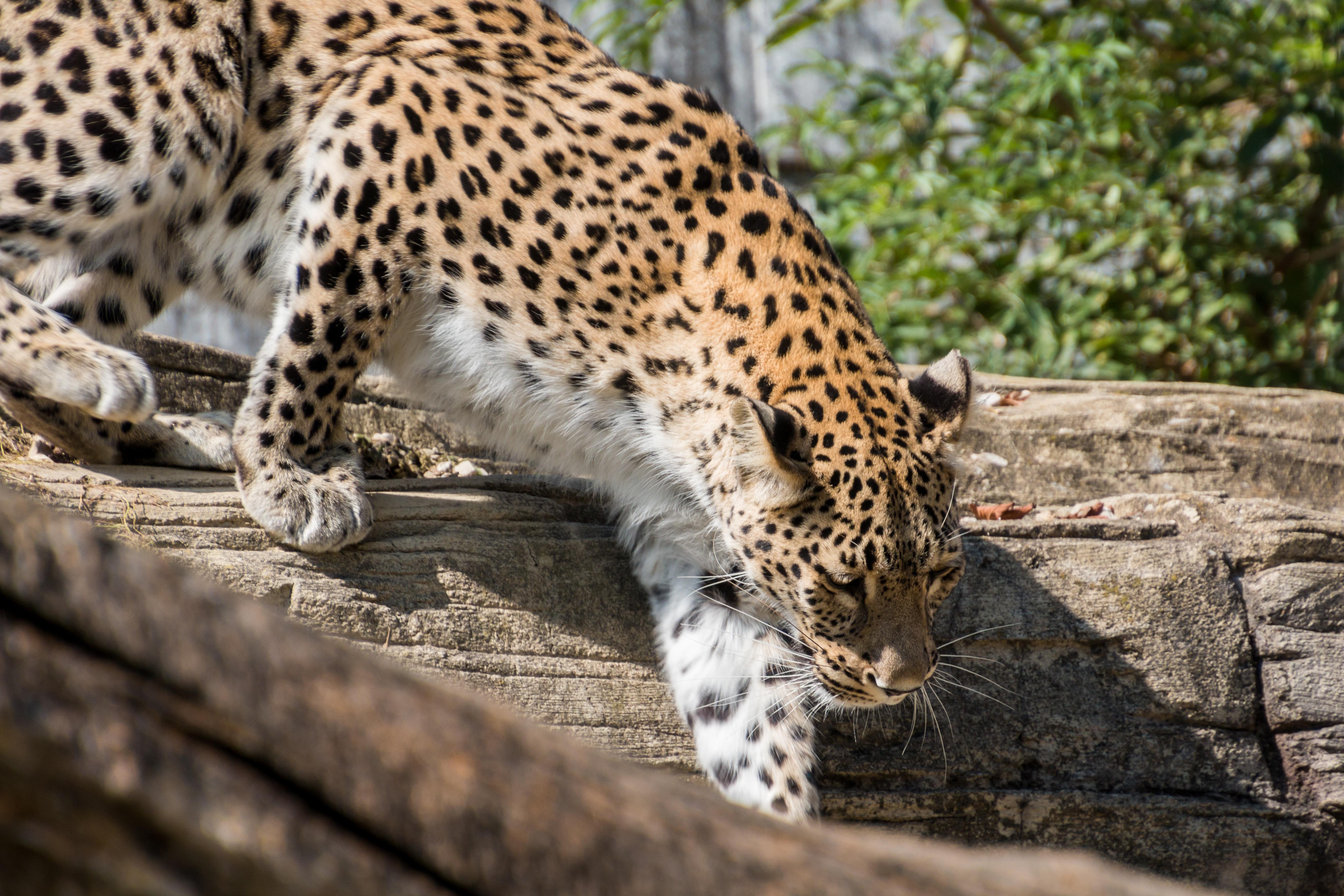 Gambar : margasatwa, kebun binatang, binatang menyusui