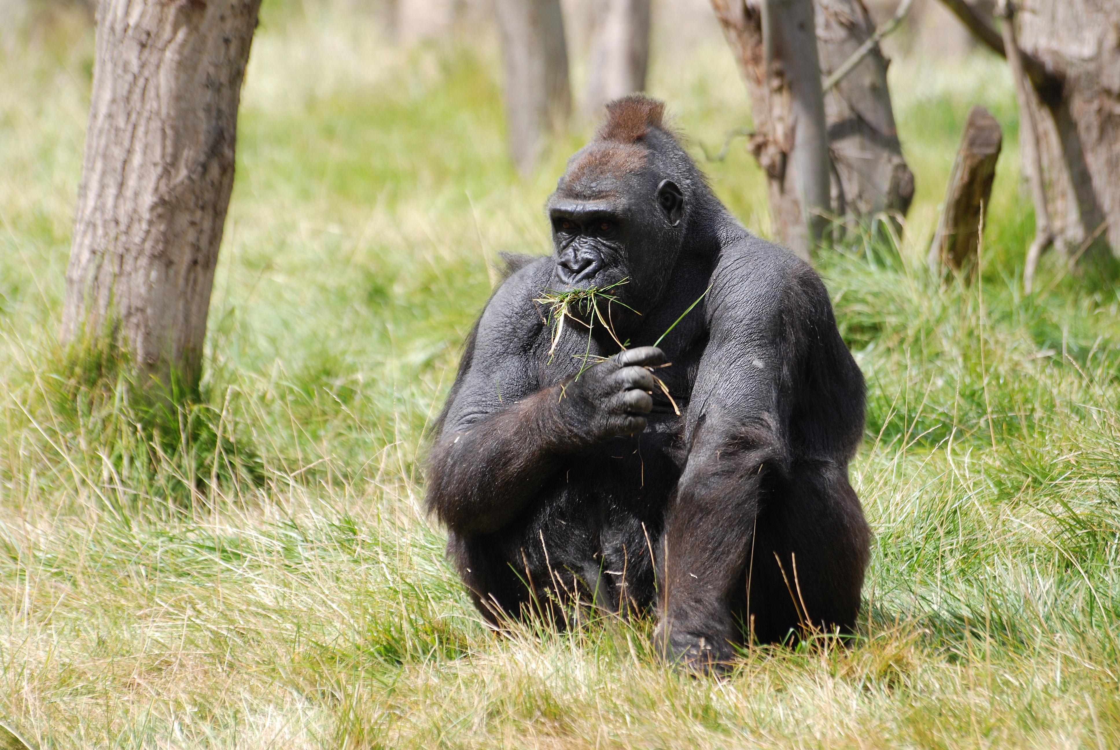 wildlife-zoo-fur-sitting-africa-mammal-b