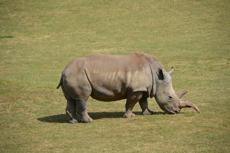 bildet dyreliv dyrehage beite pattedyr fauna