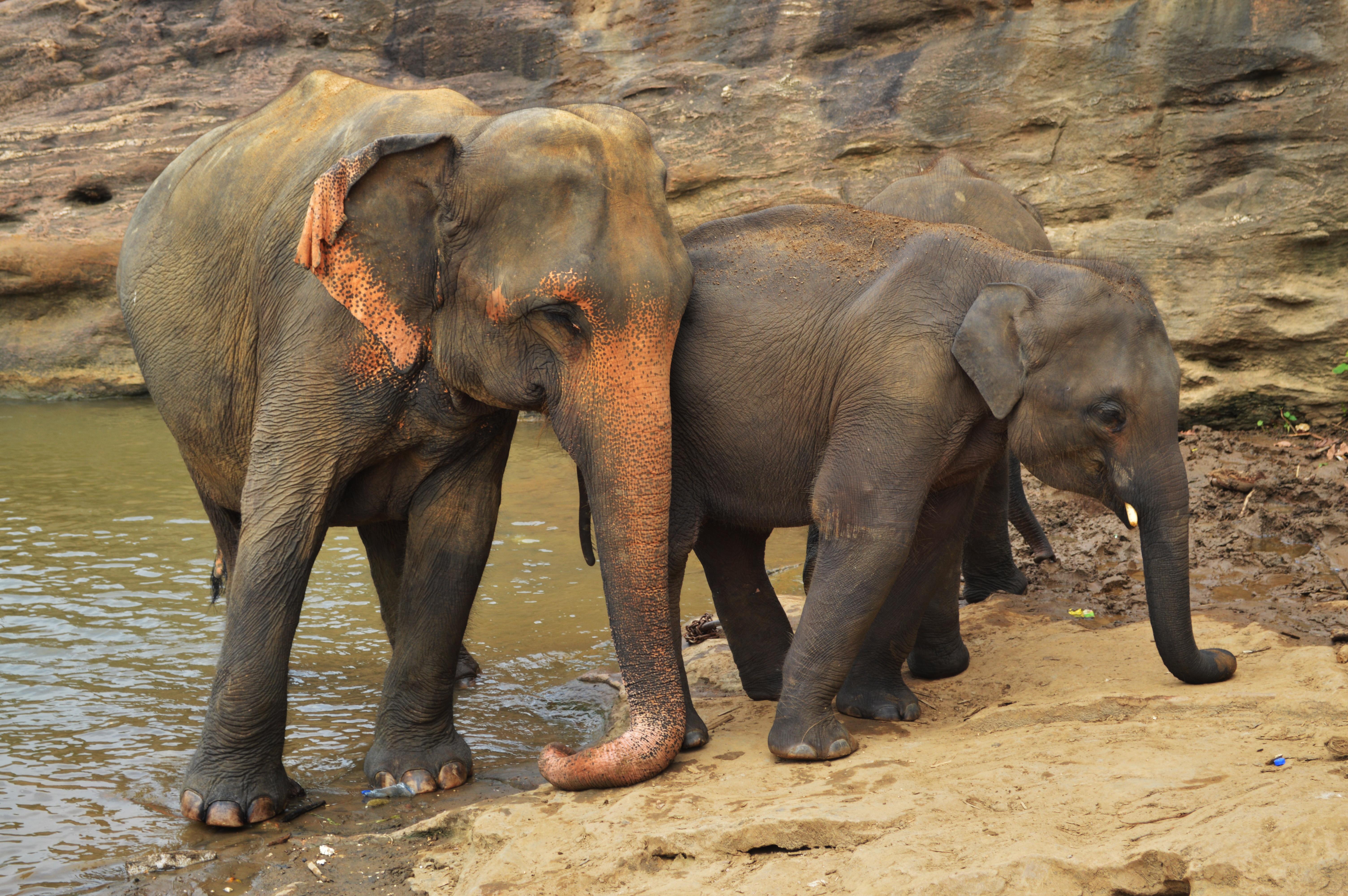 free images wildlife zoo mammal fauna safari indian
