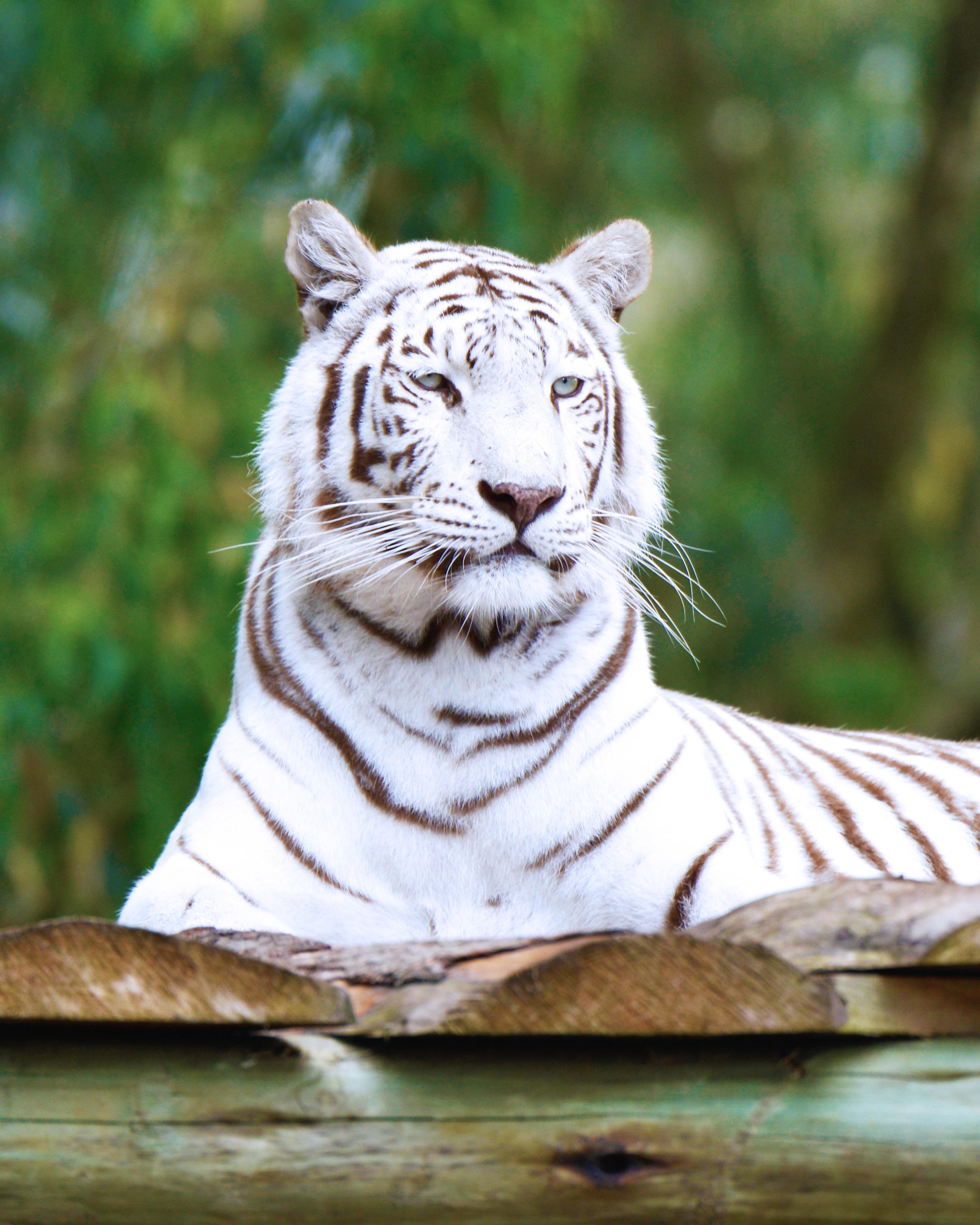 Gambar Margasatwa Kebun Binatang Binatang Menyusui Fauna