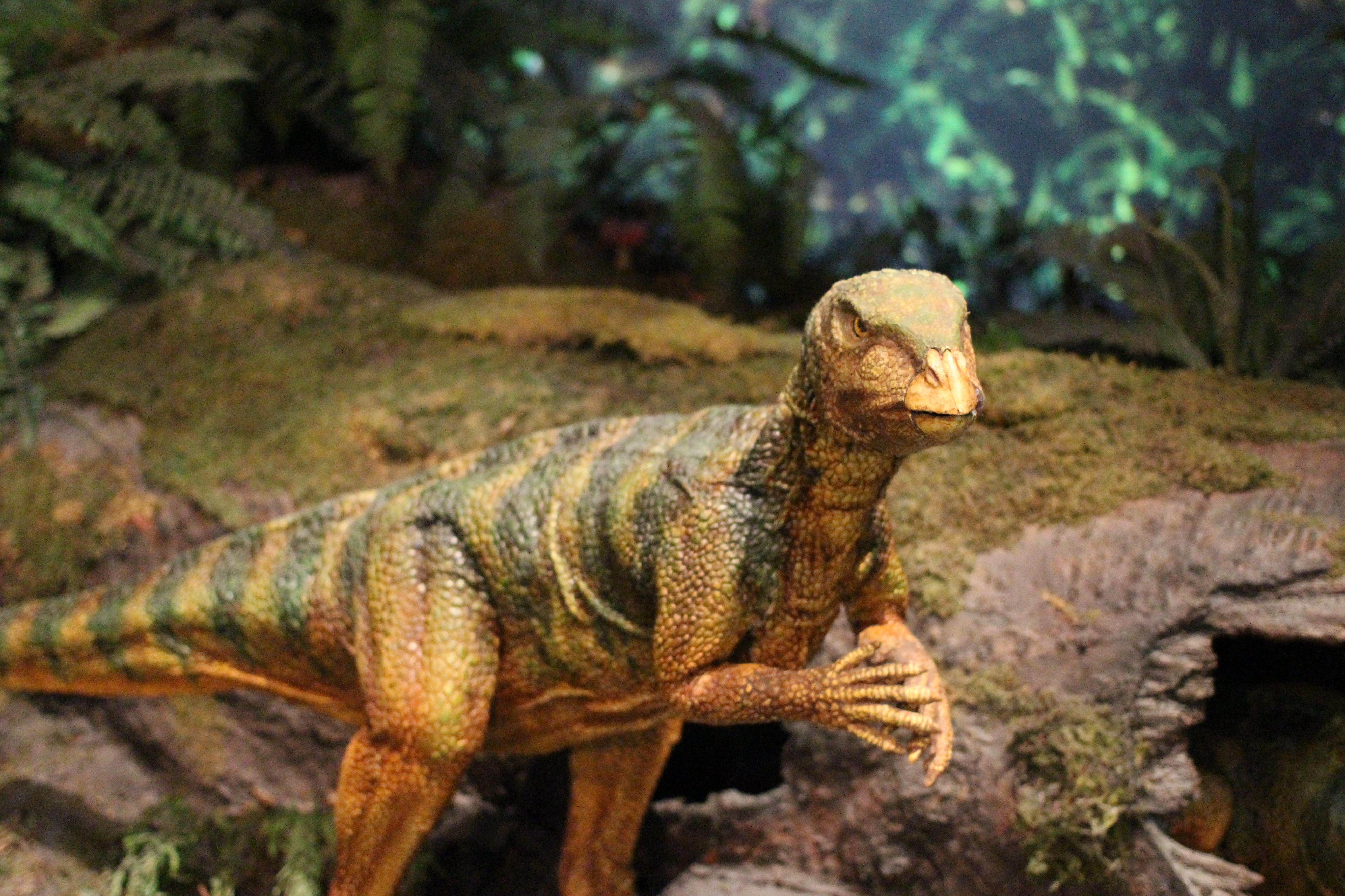 Free Images Wildlife Zoo Iguana Fauna Lizard
