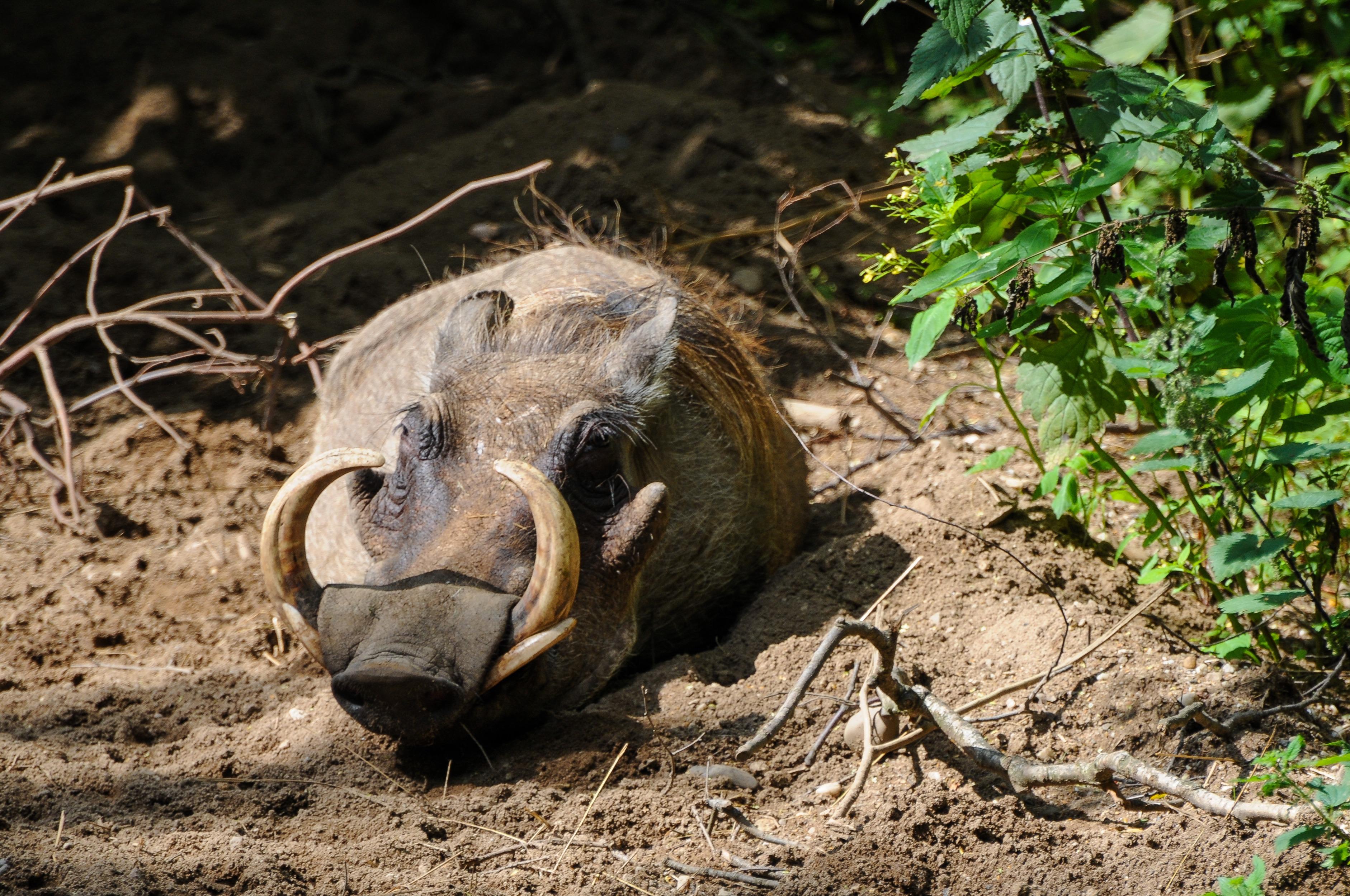 Kostenlose Foto Tierwelt Schildkrote Reptil Fauna Schlaf