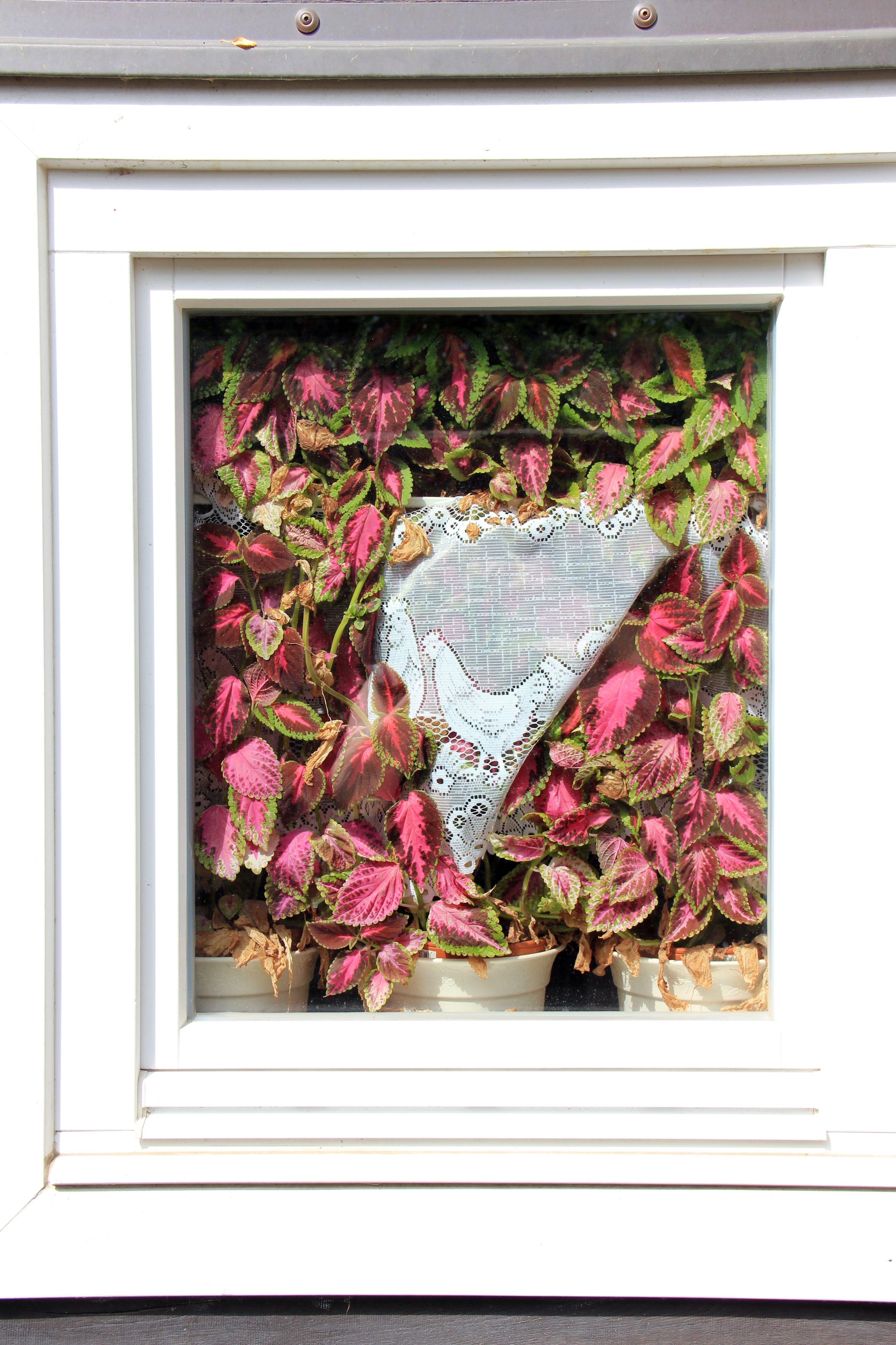Kostenlose foto : Fenster, Gebäude, Zuhause, Muster, Vorhang, Blumen ...